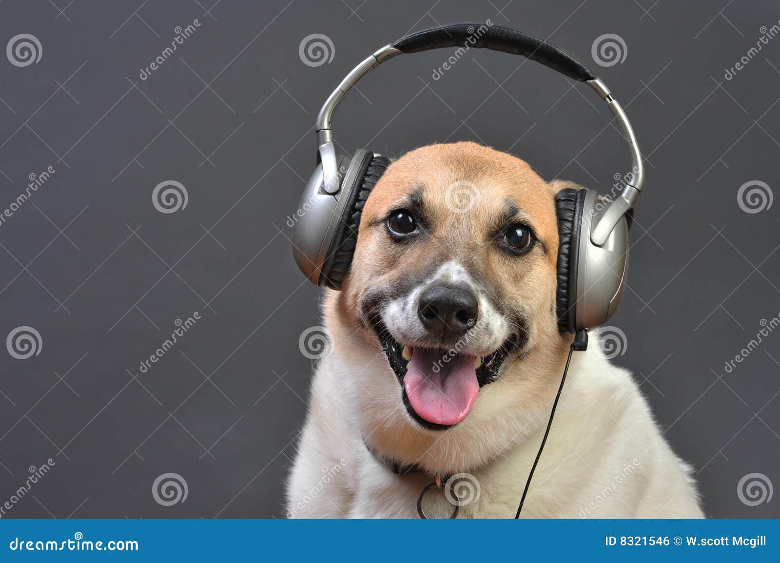 σκυλόσπιτο του DJ