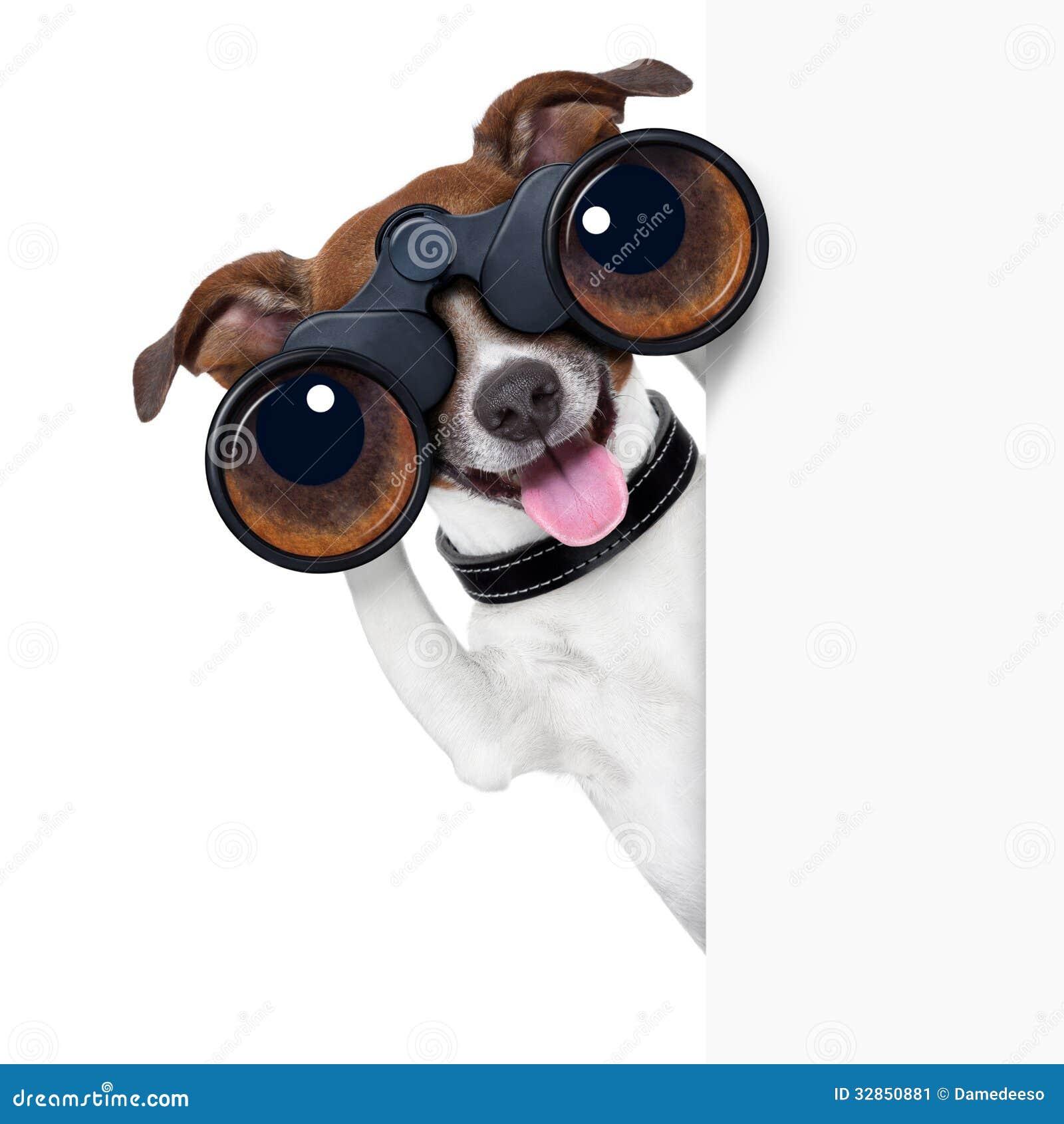 Σκυλί διοπτρών