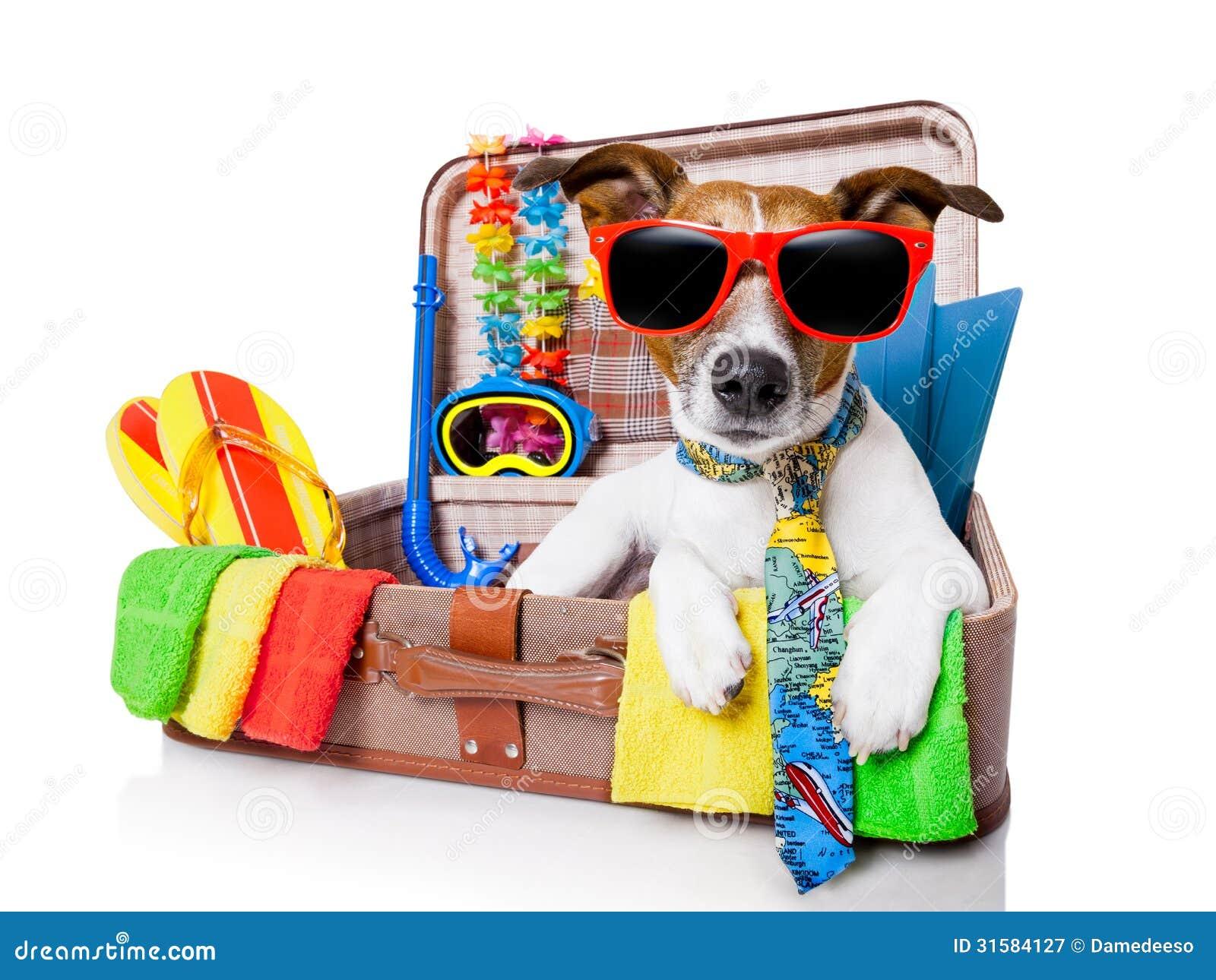 Σκυλί καλοκαιρινών διακοπών