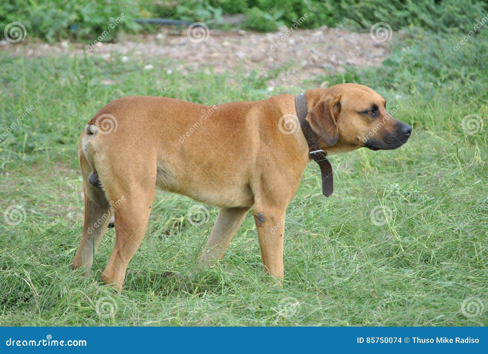 Σκυλί με ένα περιλαίμιο