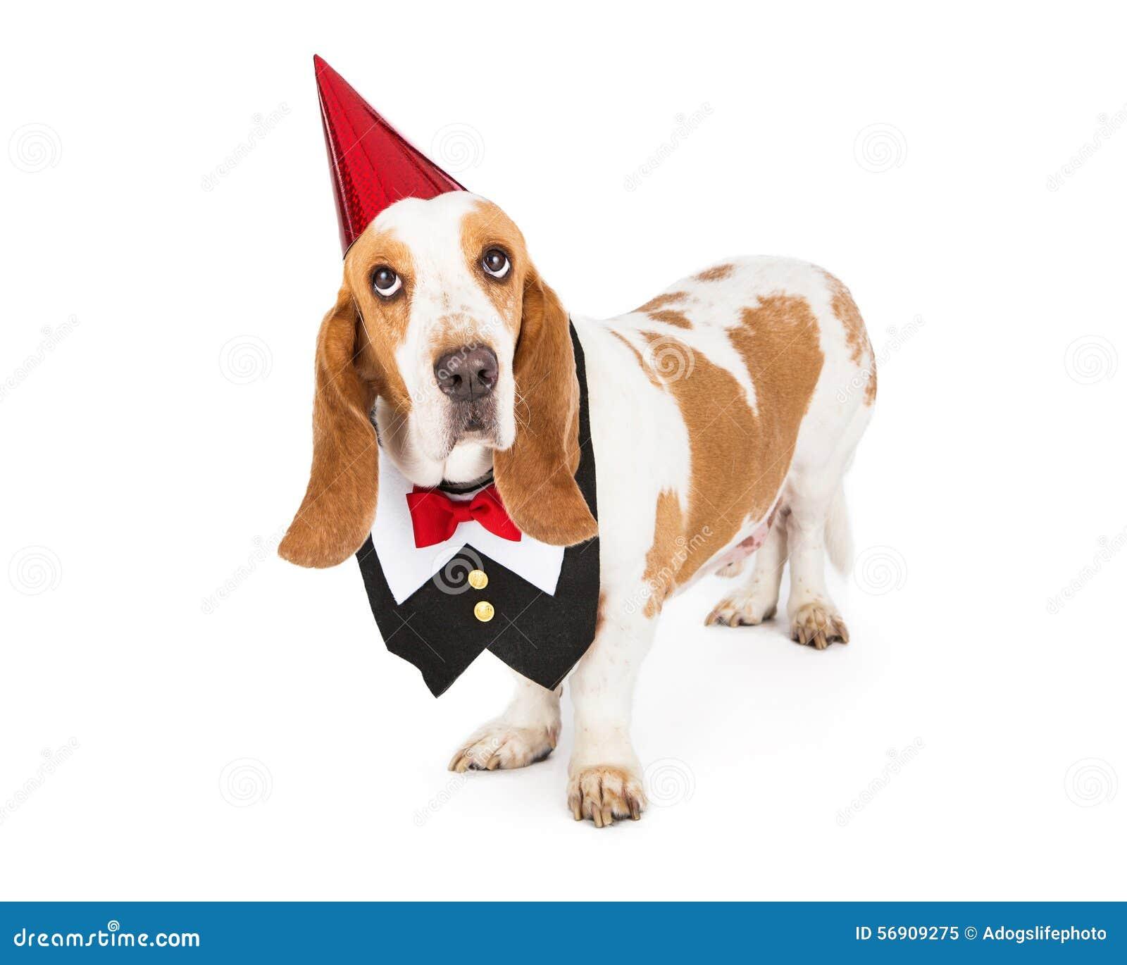 Σκυλί που φορά τη φανέλλα σμόκιν και το καπέλο κόμματος