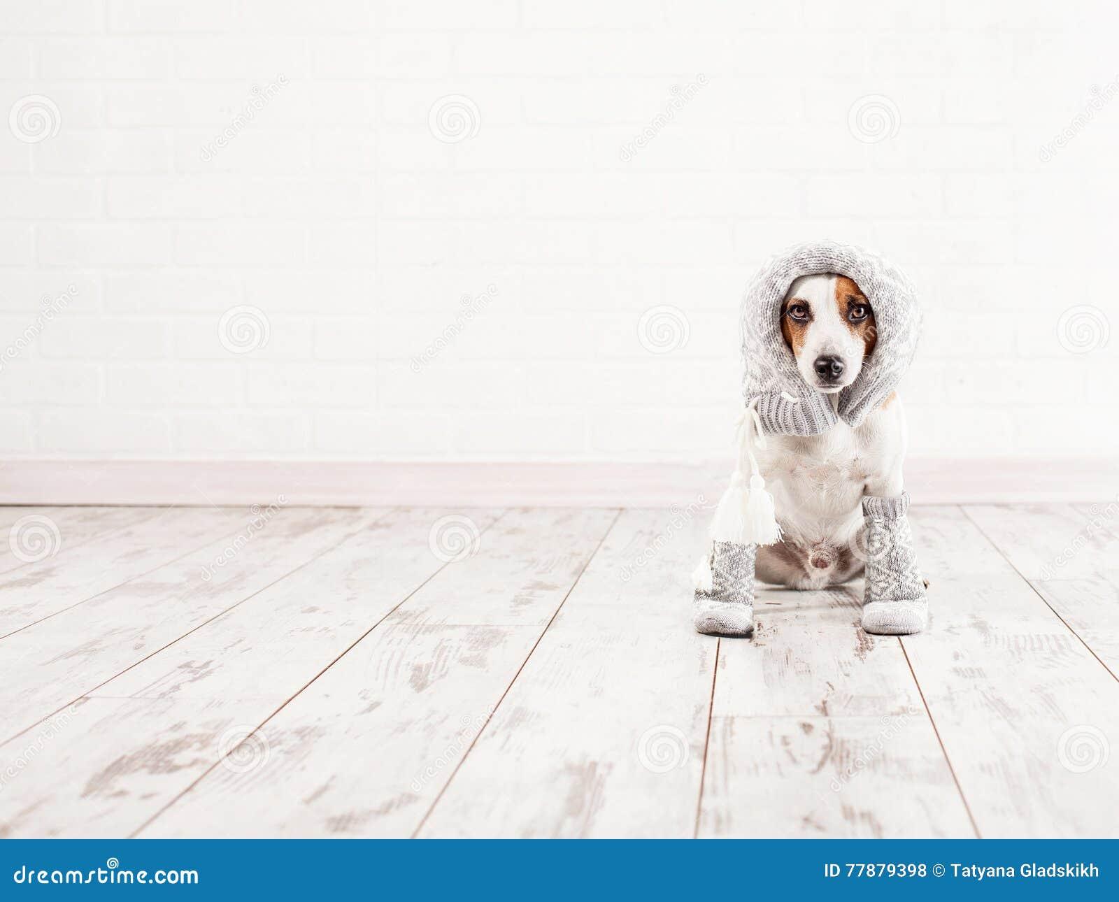 Τα θηλυκά σκυλιά έχουν οργασμούς