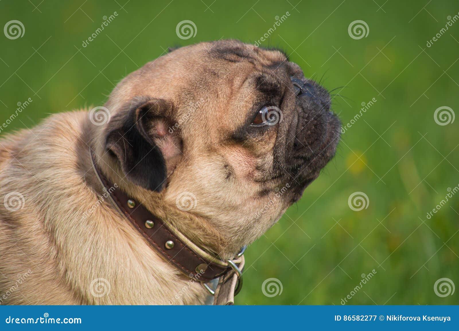 Σκυλί στο λιβάδι