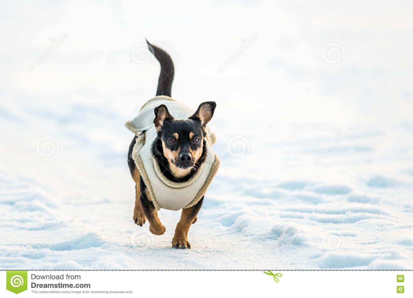 Σκυλί τα ενδύματα που οργανώνονται με στο χιόνι