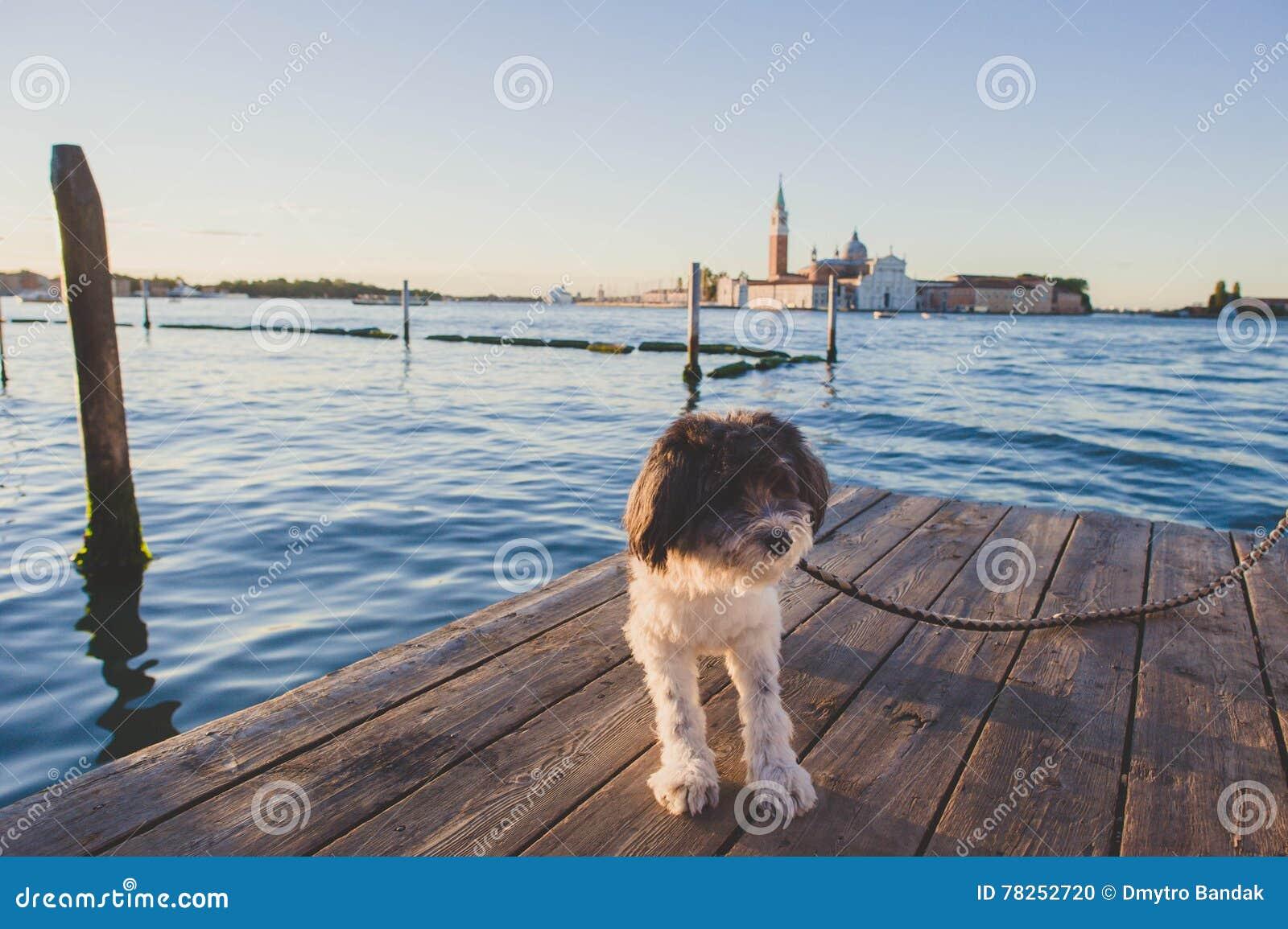 Σκυλί της Ιταλίας Βενετία