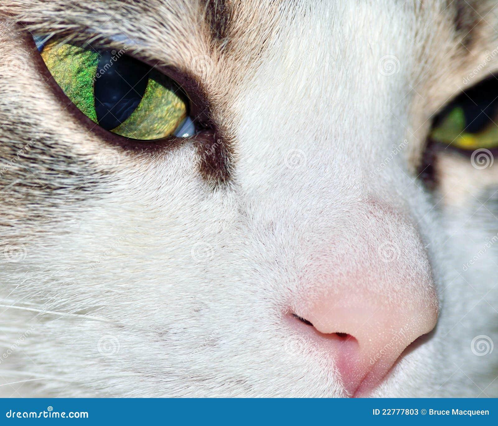 σπίτι γατών