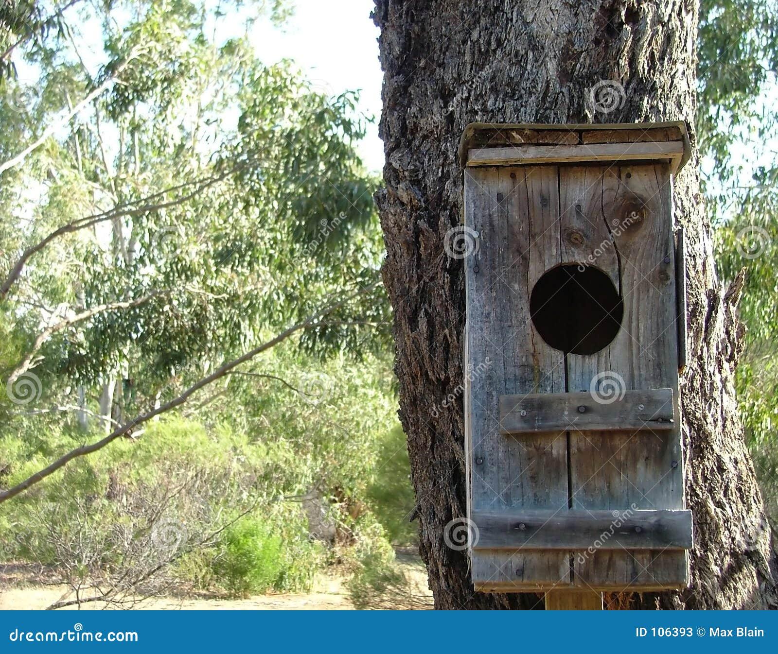 σπίτι πουλιών
