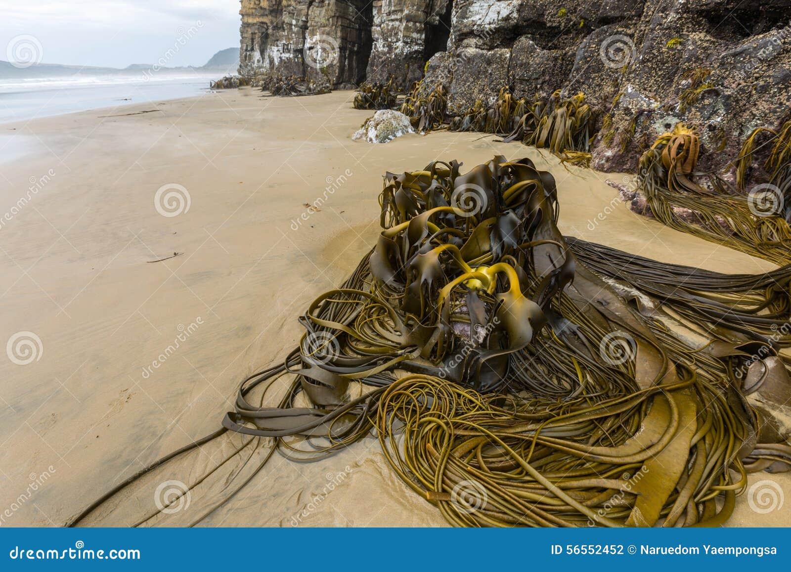 Download Σπηλιές καθεδρικών ναών, Catlins, νότιο νησί, Νέα Ζηλανδία Στοκ Εικόνες - εικόνα από μορφές, θάλασσα: 56552452