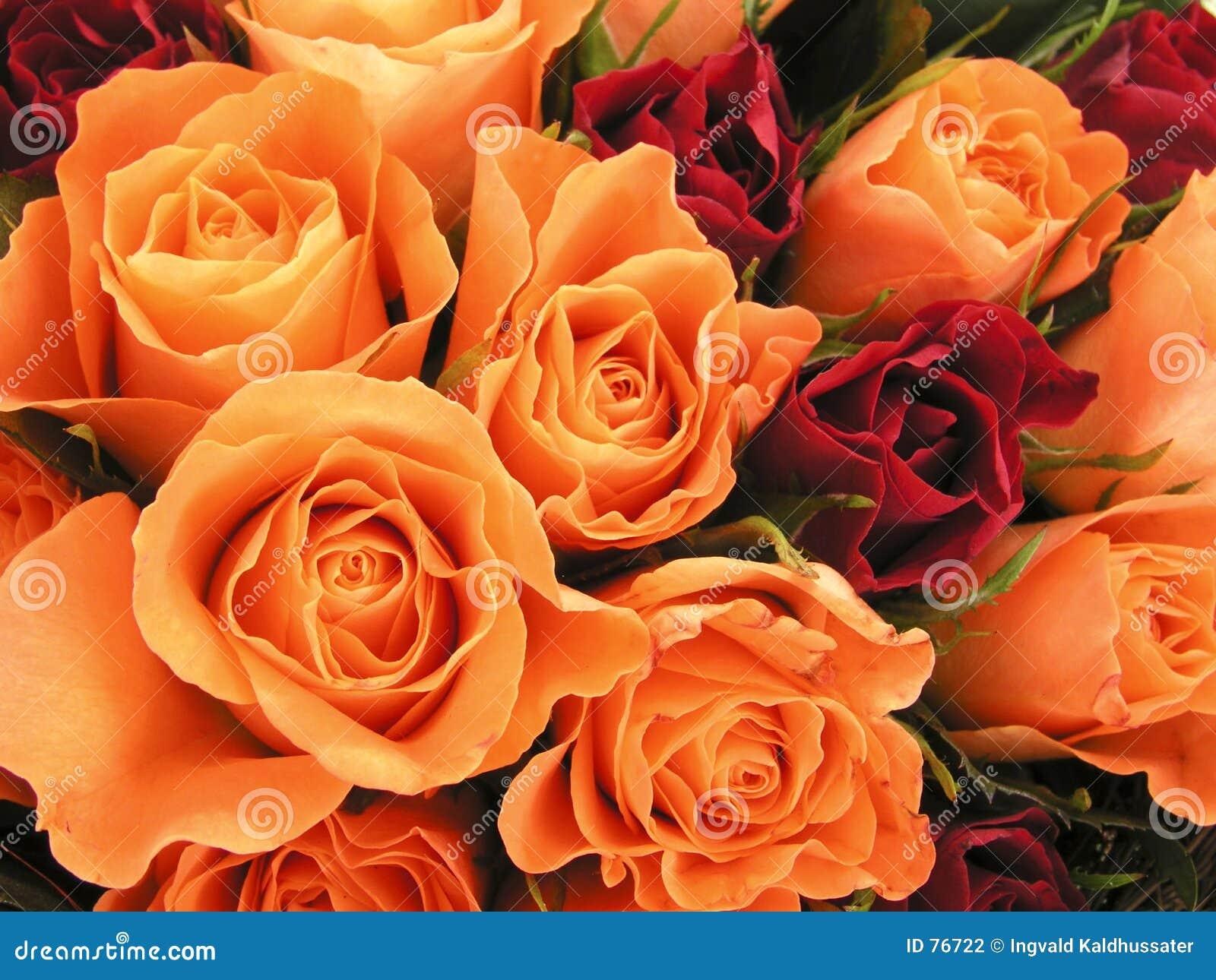 σπορείο ι τριαντάφυλλα
