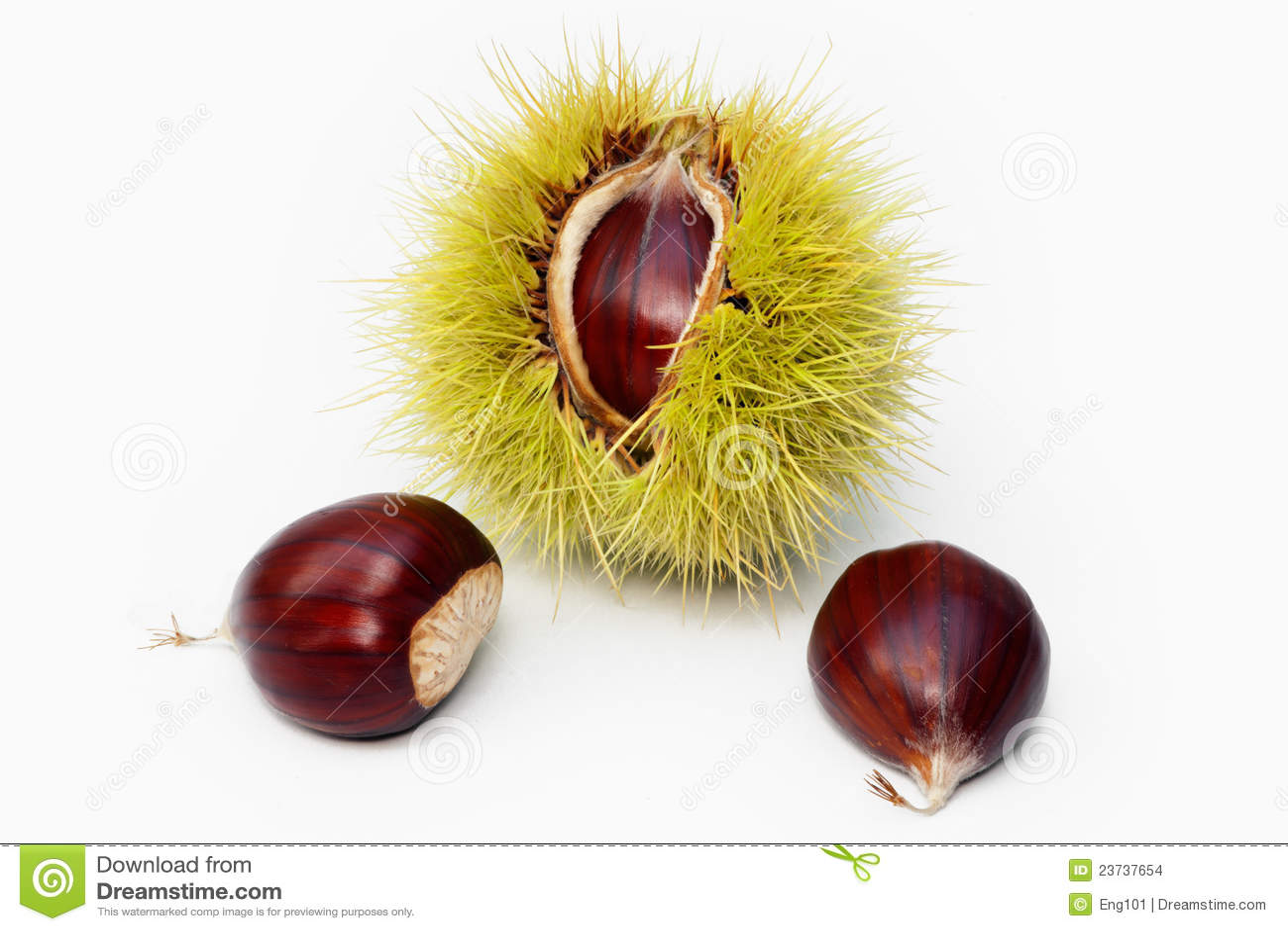 σπόροι καρπού κάστανων