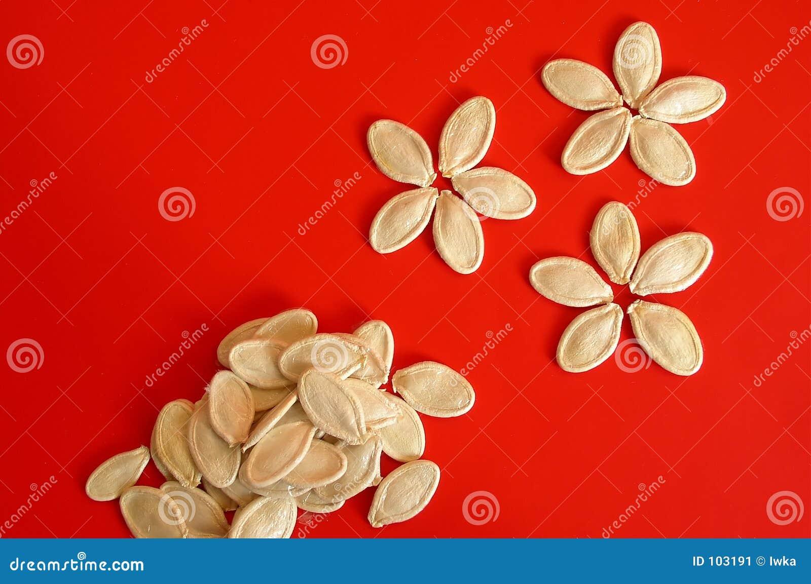 σπόροι κολοκύθας