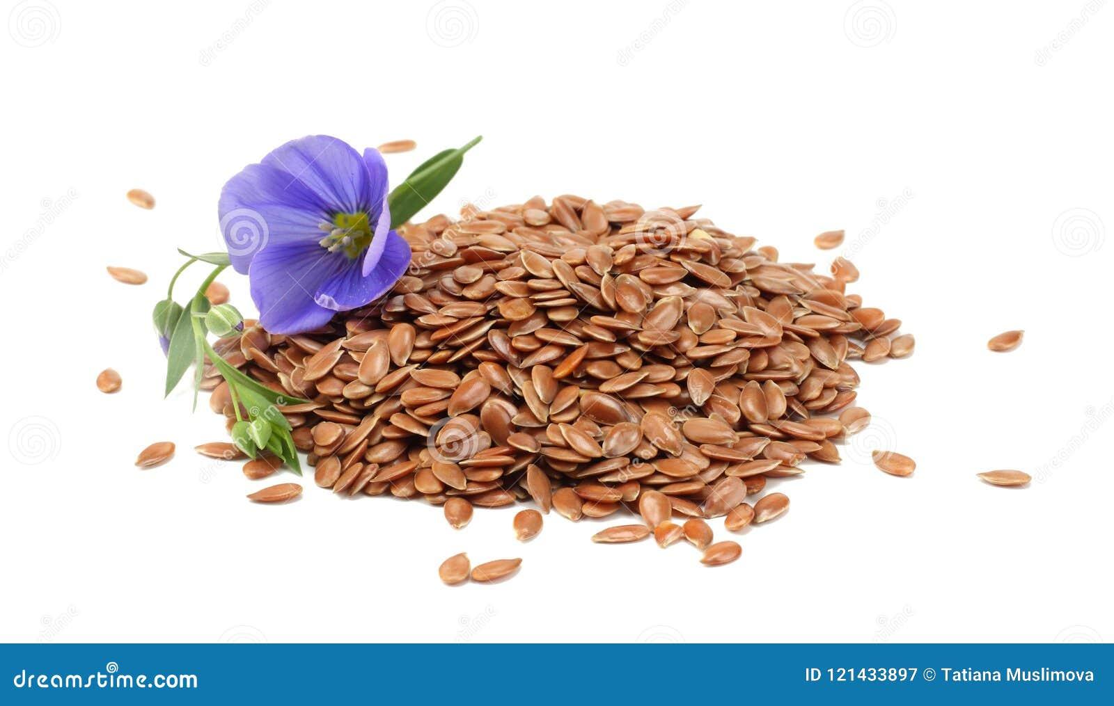Σπόροι λιναριού με το λουλούδι που απομονώνεται στο άσπρο υπόβαθρο flaxseed ή λιναρόσπορος δημητριακά