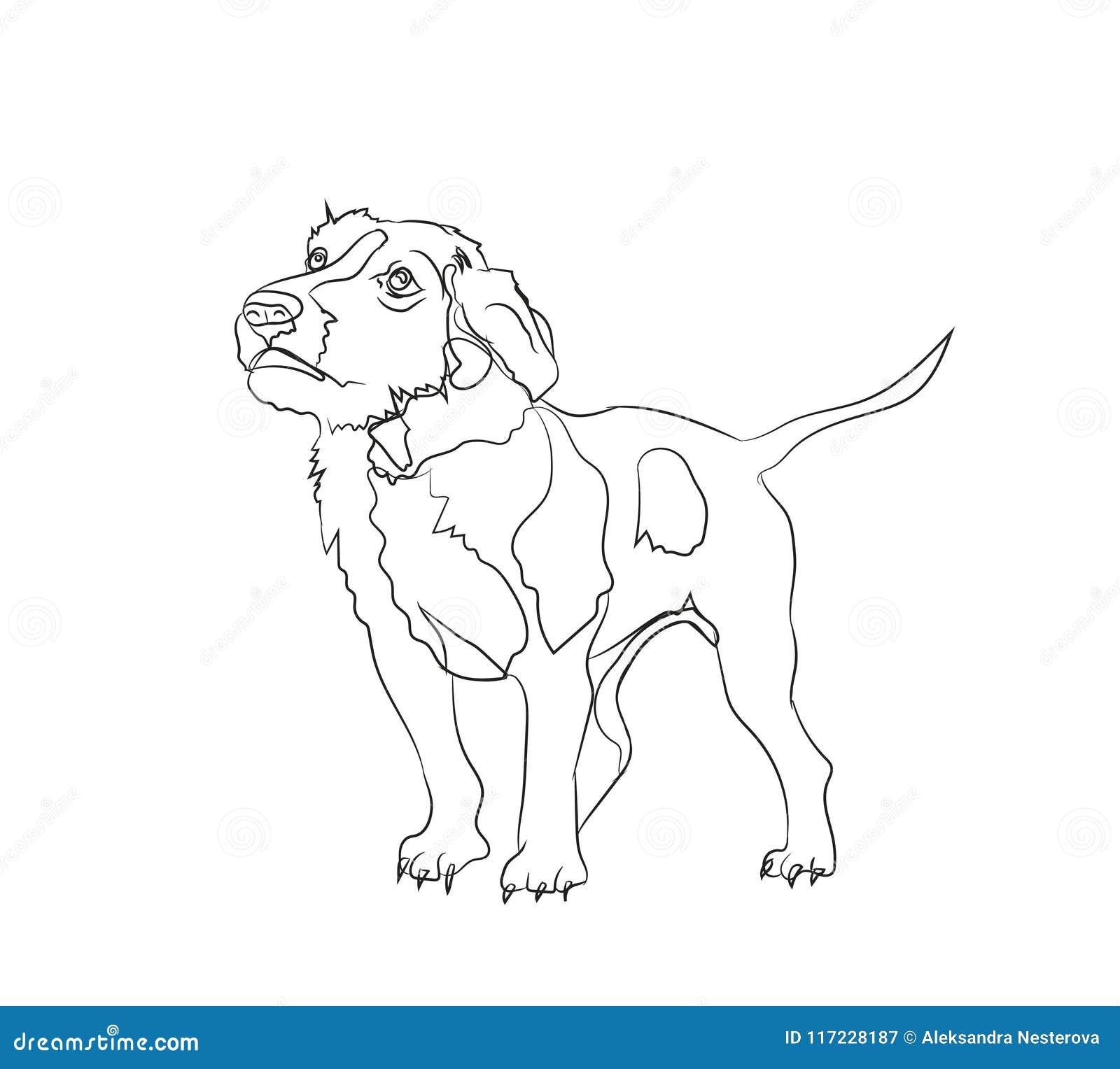 Στάσεις σκυλιών, γραμμές, διάνυσμα