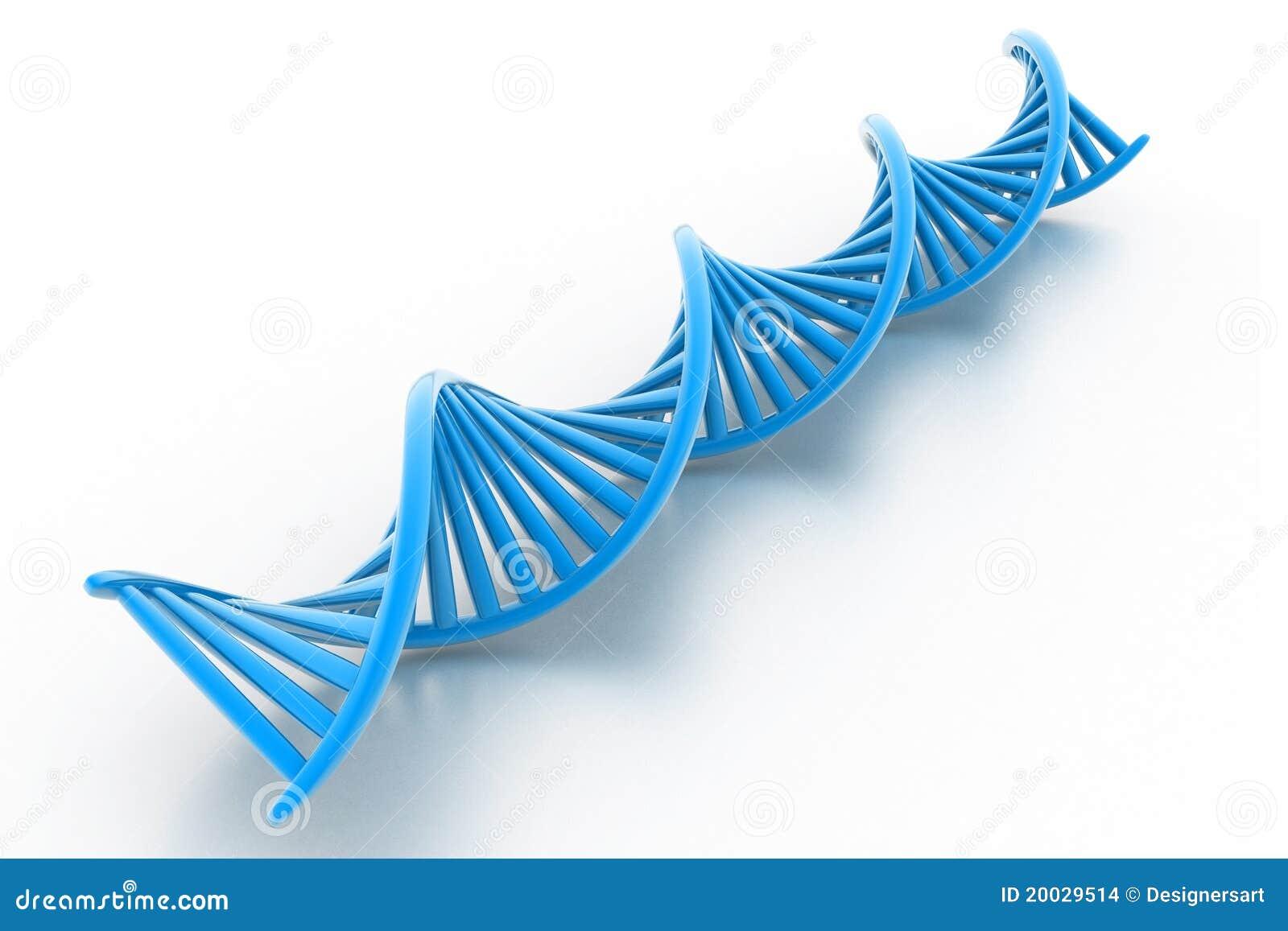 στάσεις DNA