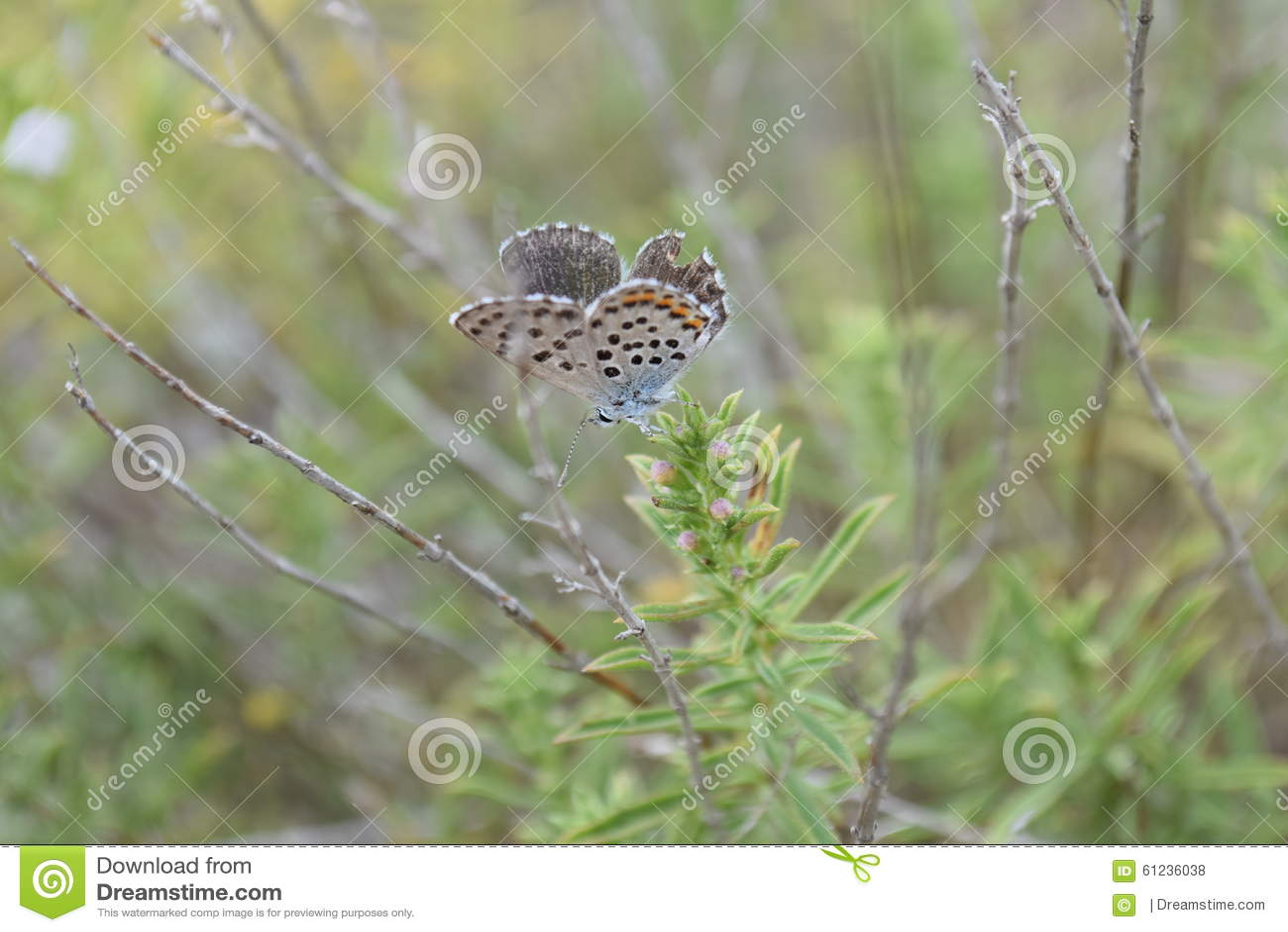 στήριξη πεταλούδων