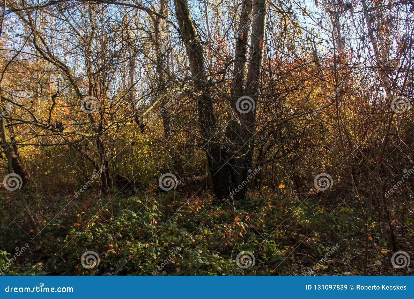 Στα δάση