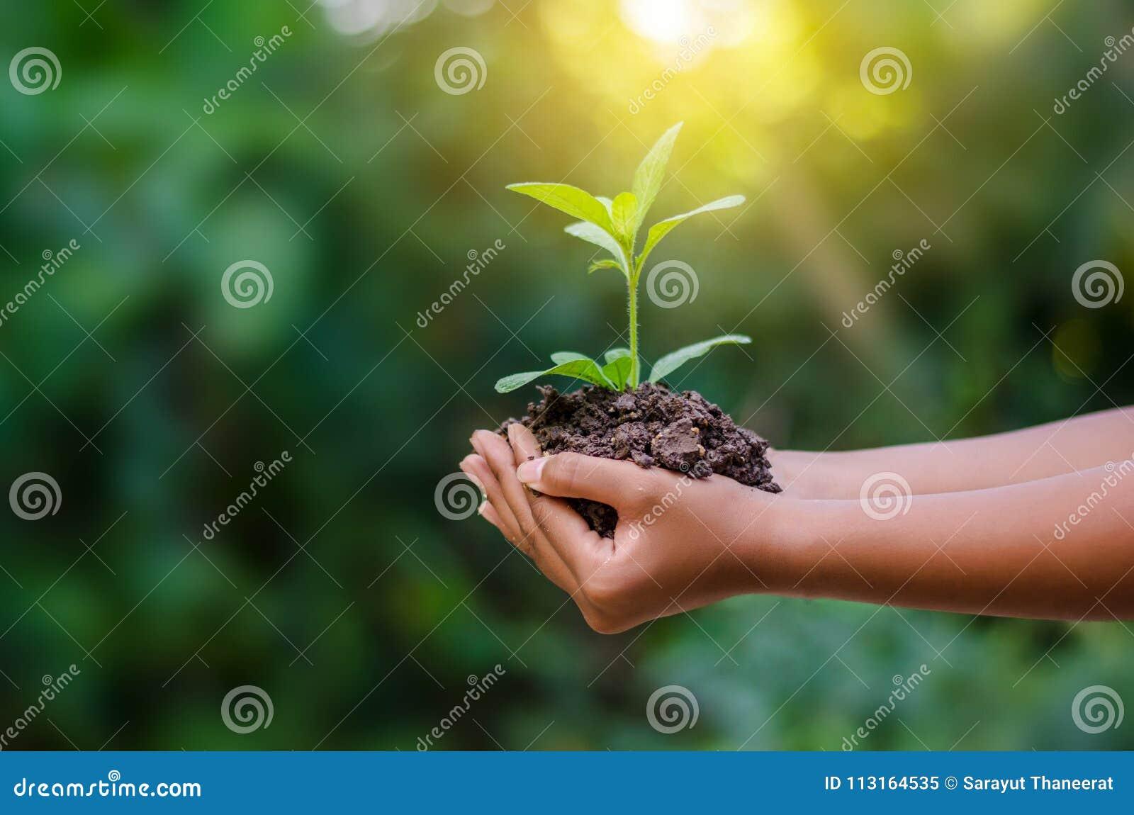Στα χέρια των δέντρων που αυξάνονται τα σπορόφυτα Bokeh πράσινο δέντρο εκμετάλλευσης χεριών υποβάθρου θηλυκό στη δασική συντήρηση