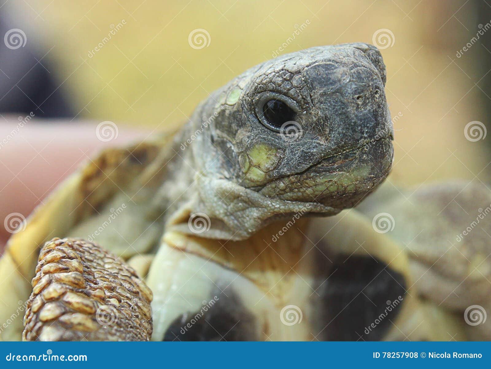 στενή ρηχή χελώνα εστίασης πεδίων ματιών βάθους επάνω πολύ