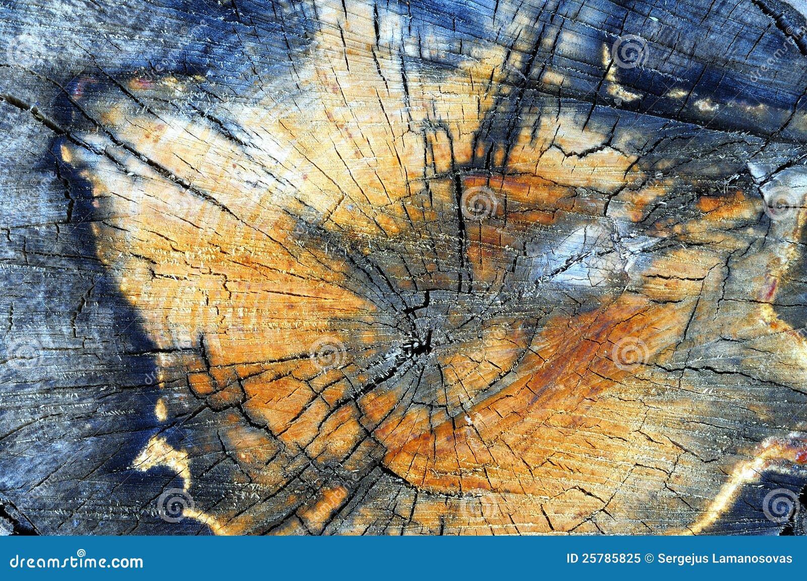 Στενός επάνω κολοβωμάτων δέντρων Aspen