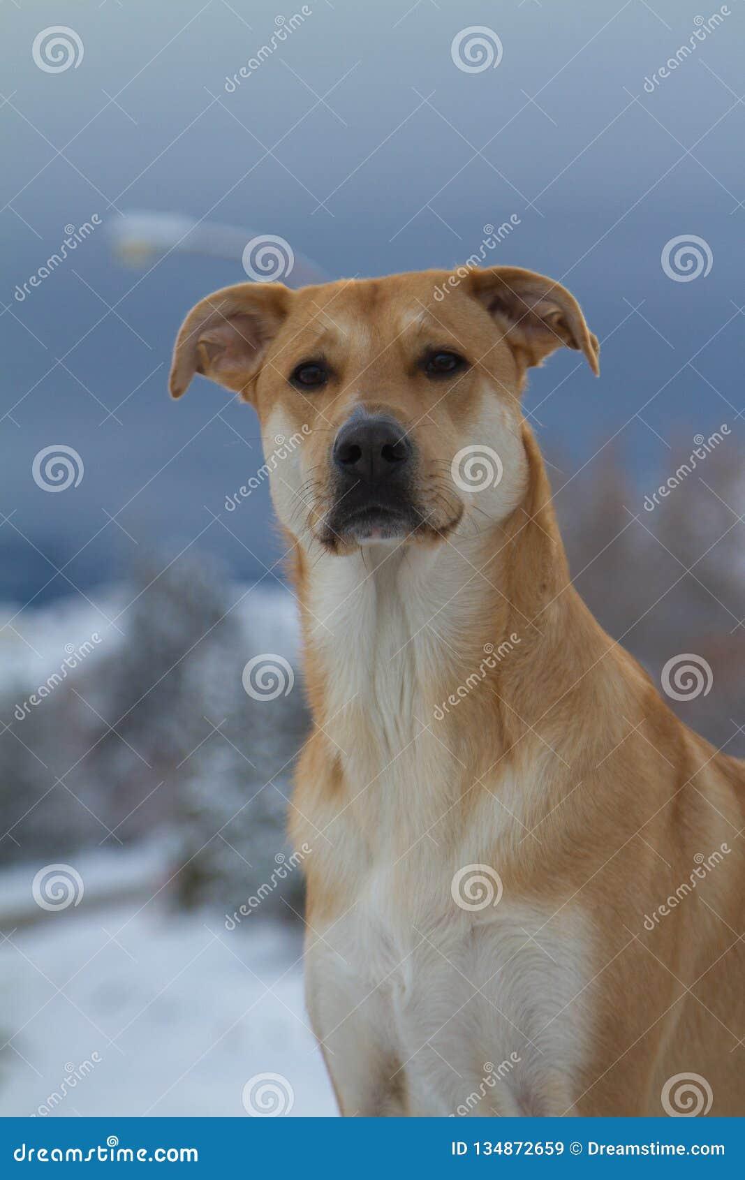 στενό σκυλί επάνω
