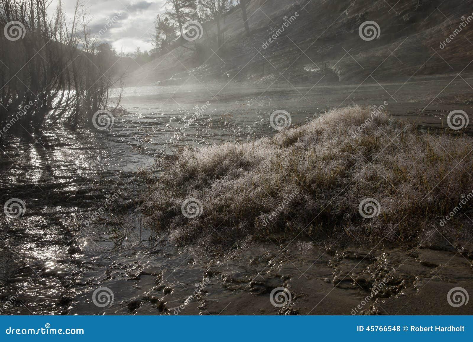 στενό τέλειο επάνω ύδωρ πρωινού φύλλων χλόης σταγονίδιων δροσιάς