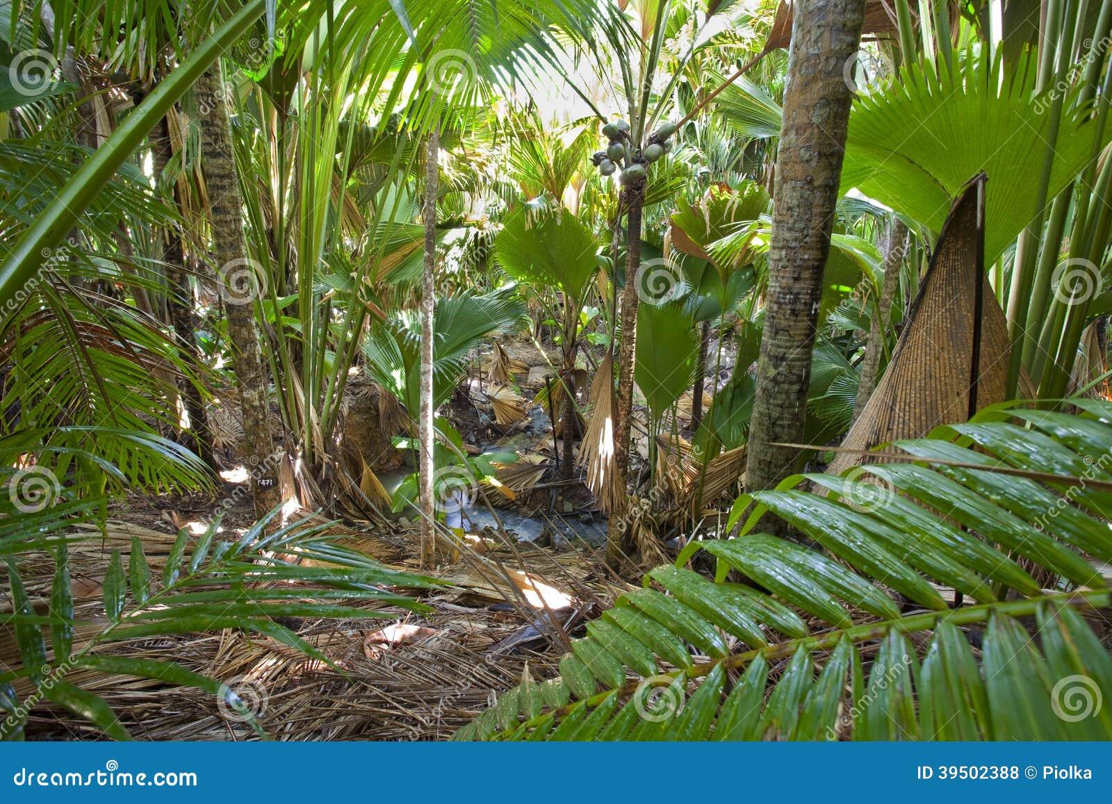 Στη ζούγκλα