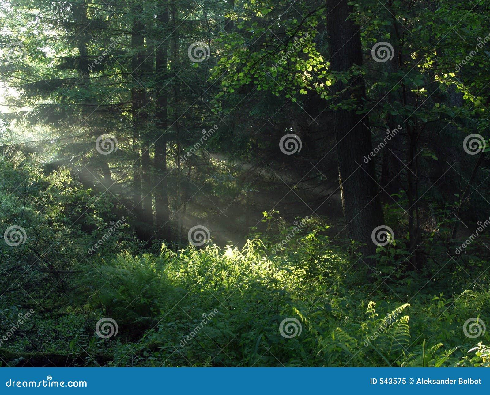 στις αρχές δασικού πρωινού
