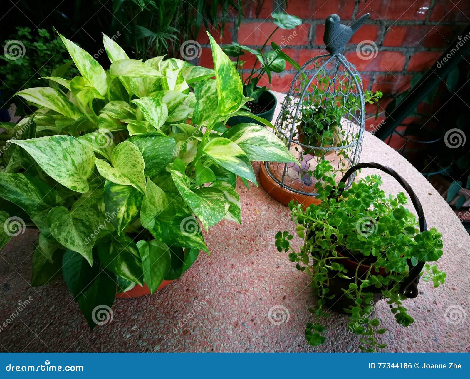 Στοιχεία ντεκόρ κήπων με τις πράσινες εγκαταστάσεις