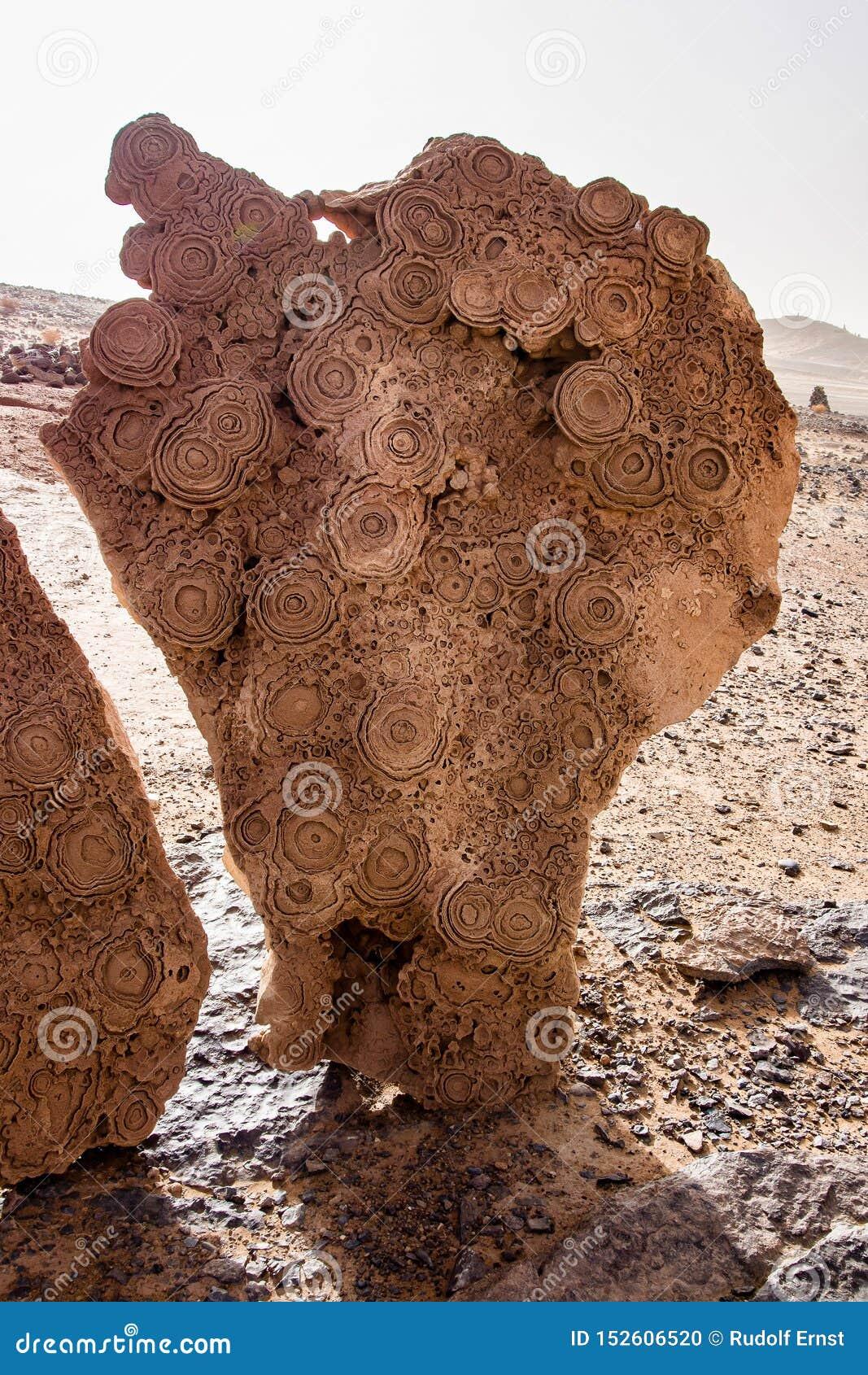 Στους αμμόλοφους Erg Chebbi κοντά σε Merzouga στο νοτιοανατολικό Μαρόκο