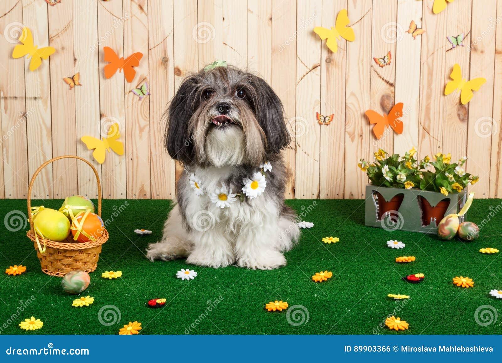 Στούντιο που πυροβολείται ενός χαριτωμένου σκυλιού στη δονούμενη σκηνή Πάσχας ανοίξεων
