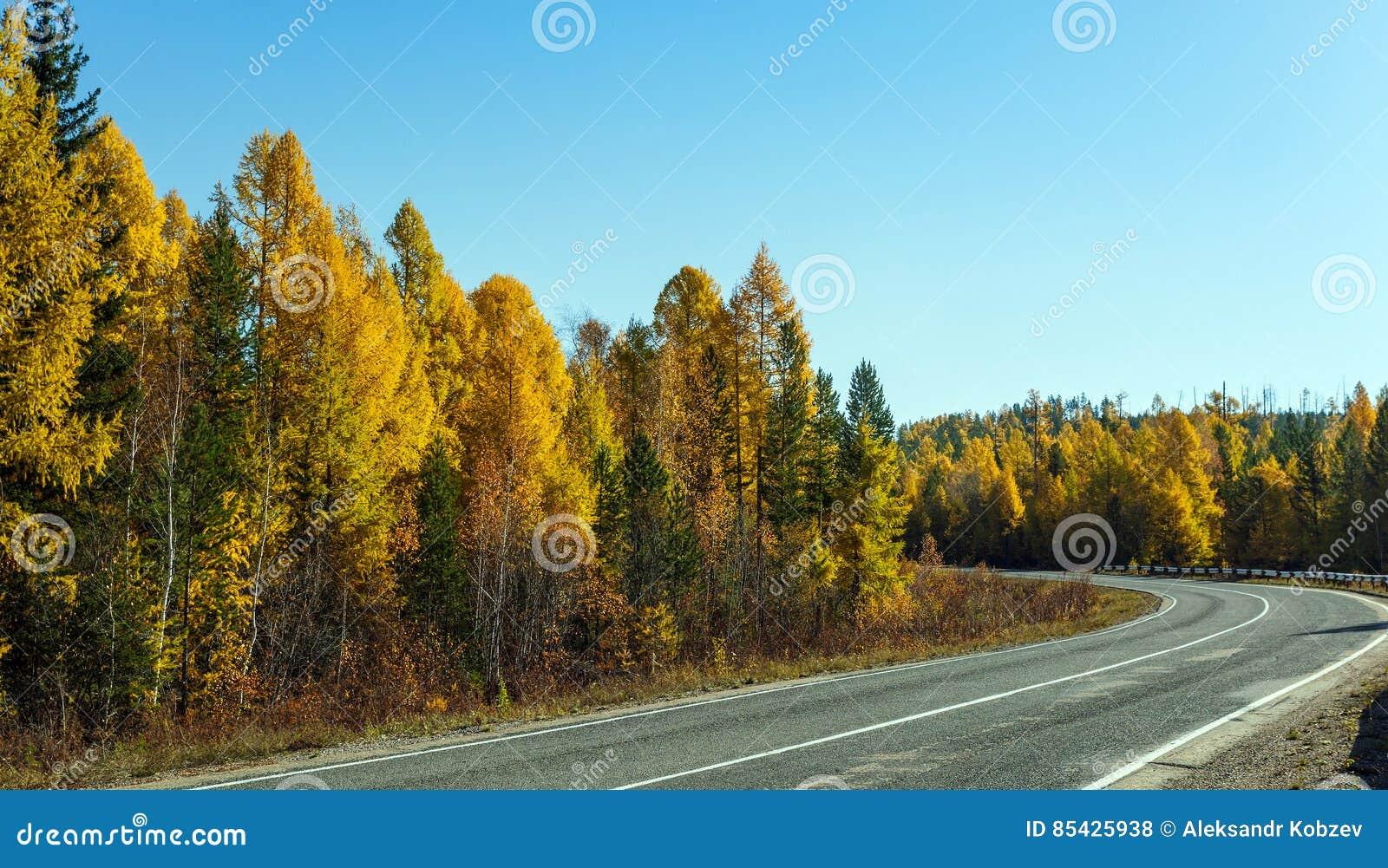 Στροφή του δρόμου ασφάλτου στο δάσος