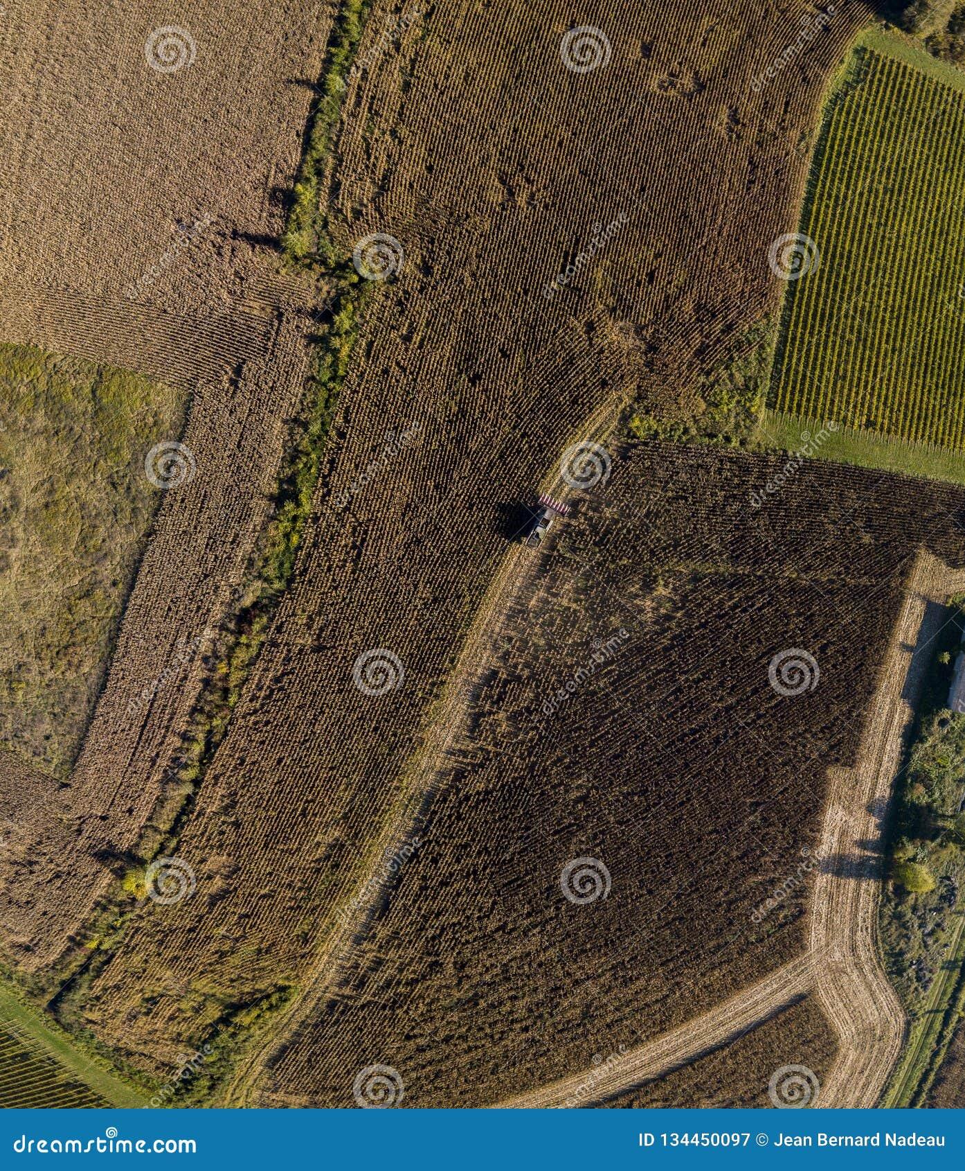 Συγκομιδή του καλαμποκιού κατά την εναέρια τοπ άποψη φθινοπώρου