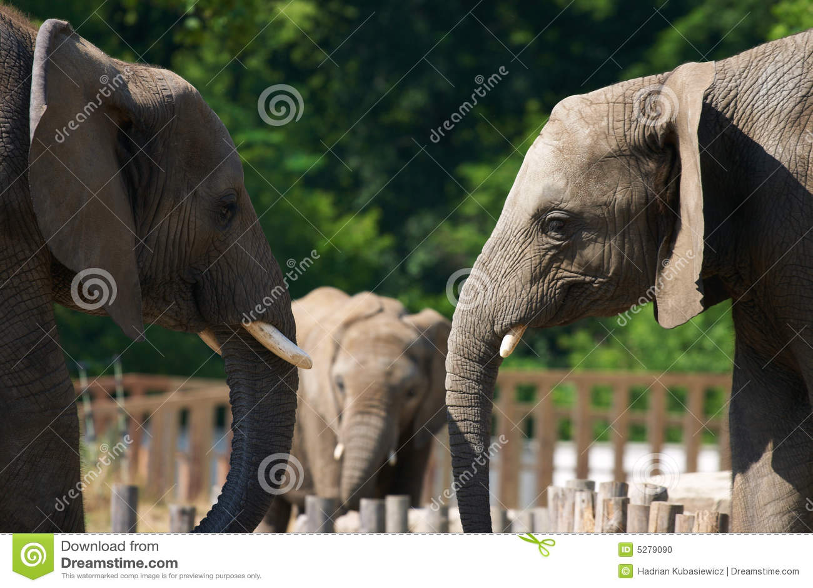συζήτηση ελεφάντων