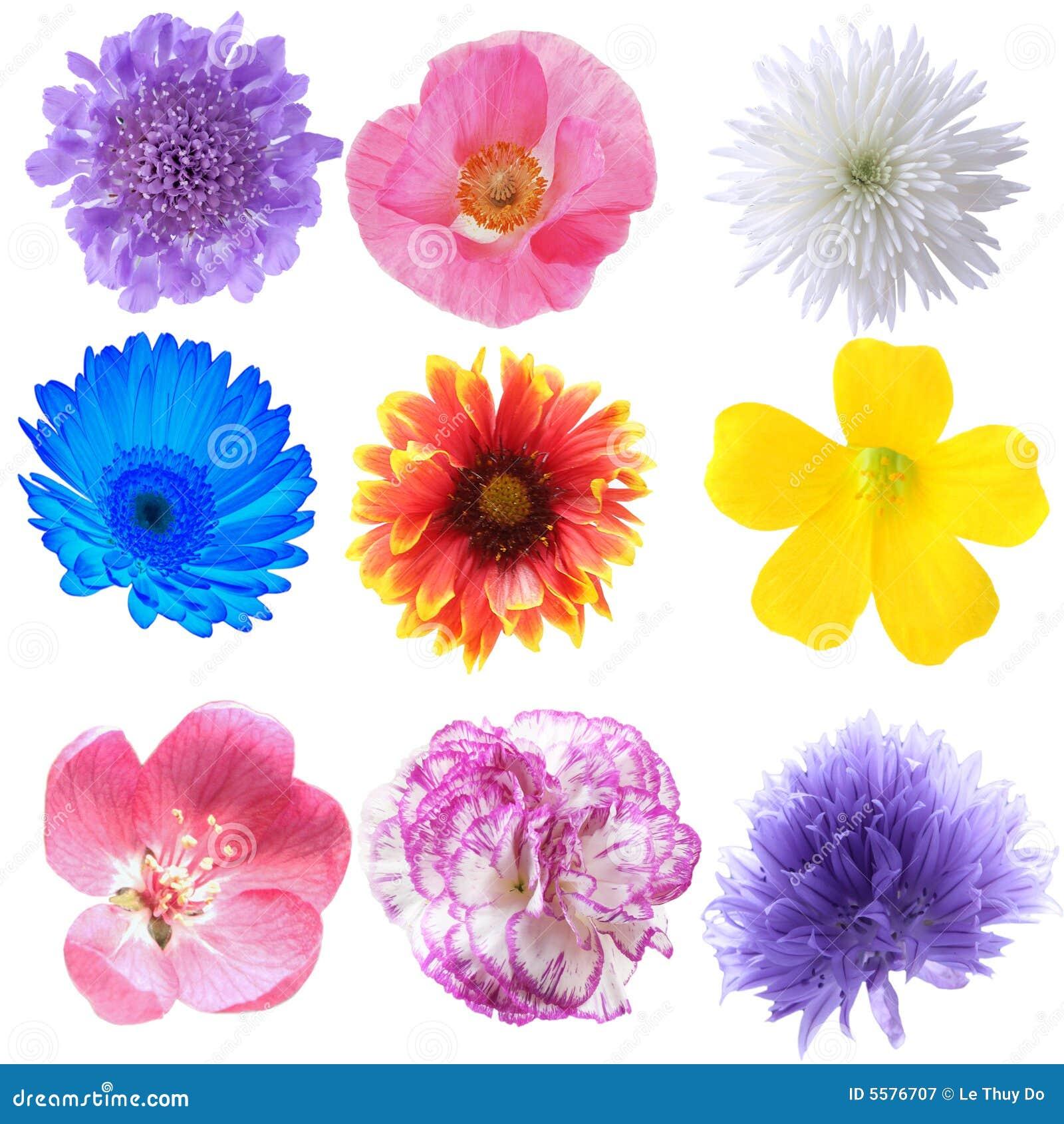 Συλλογή λουλουδιών