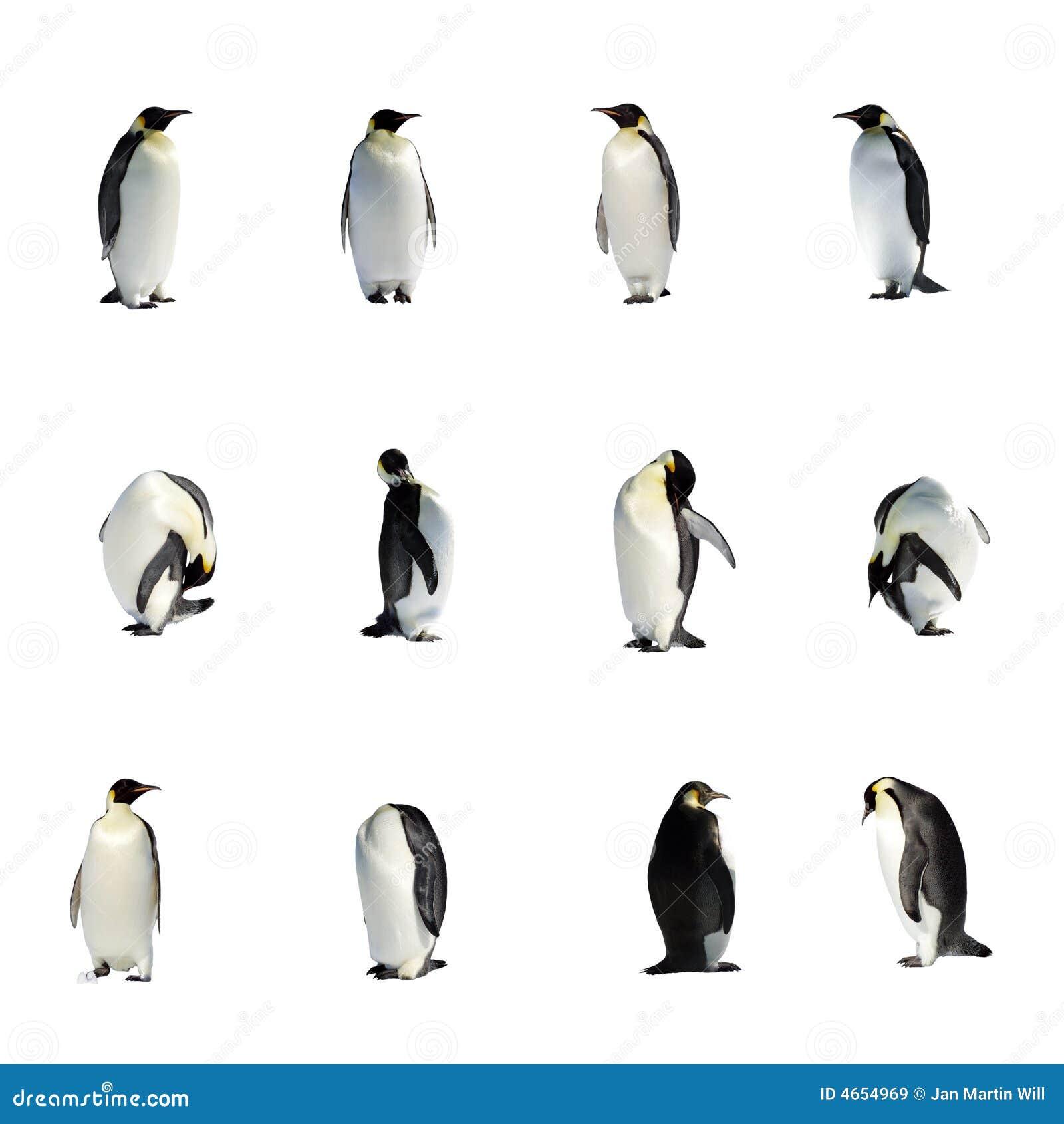 συλλογή penguins