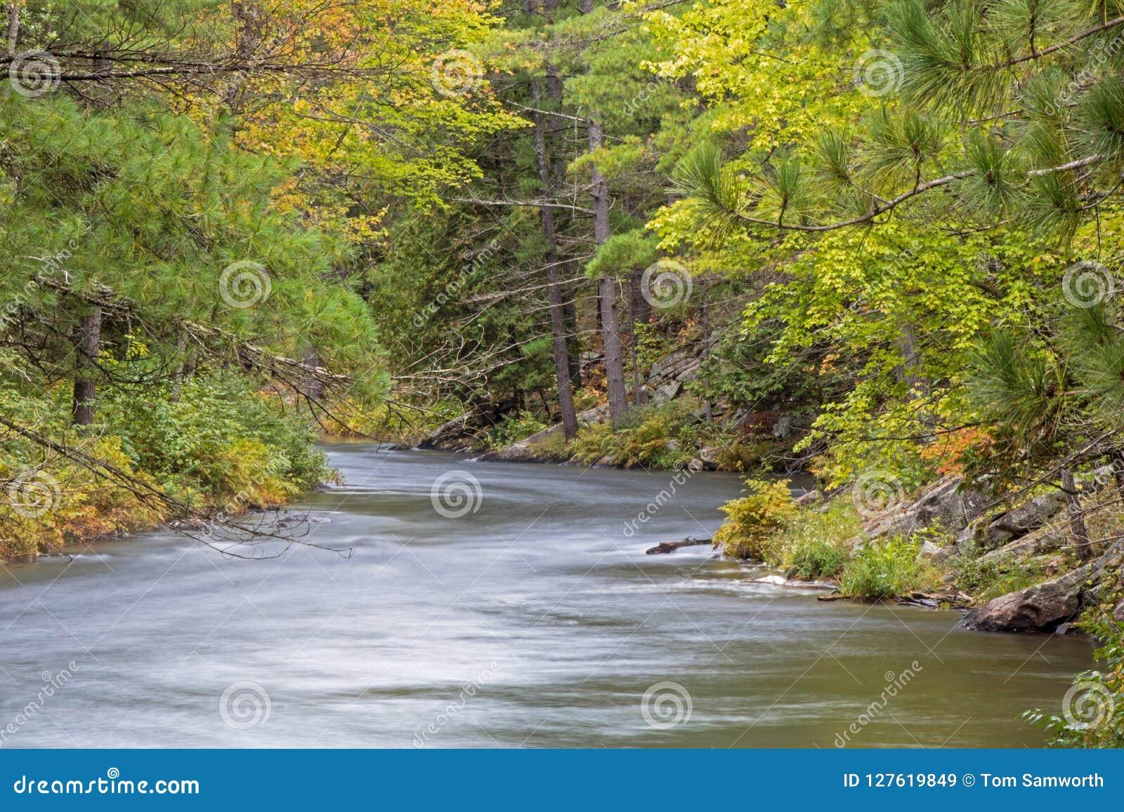 Συμπιέσεις ποταμών Mississauga μεταξύ των πεύκων