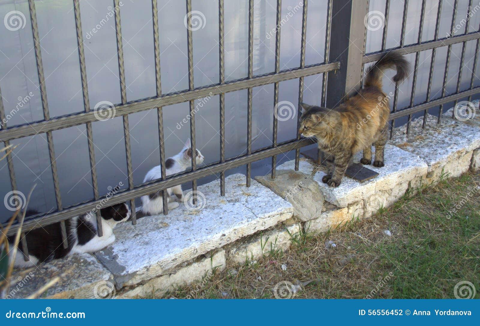 Download Συνάντηση γατών στοκ εικόνες. εικόνα από οδός, ενιαίος - 56556452