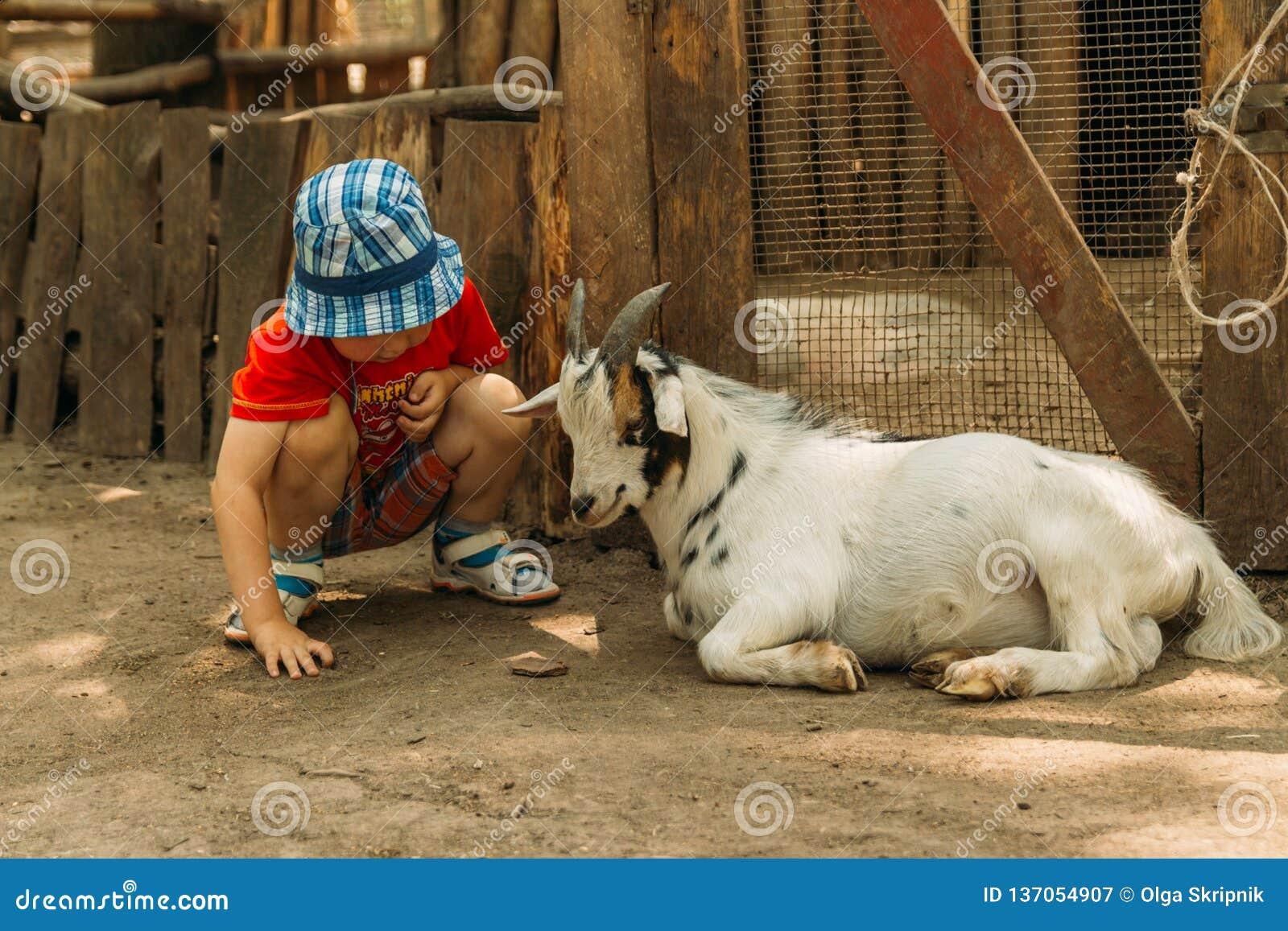 Συνεδρίαση αγοριών κοντά σε μια άσπρη αίγα, φιλία μεταξύ ενός παιδιού και ένα ζώο στο ζωολογικό κήπο σχετικά με το ζωολογικό κήπο