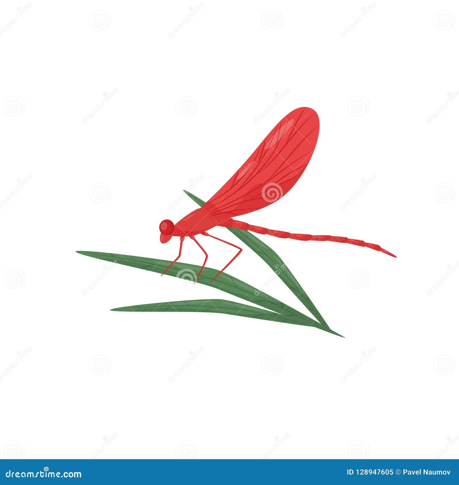 Συνεδρίαση λιβελλουλών στο πράσινο φύλλο Fast-flying έντομο με τα φωτεινά κόκκινα φτερά και μακρύ σώμα Επίπεδο διανυσματικό σχέδι