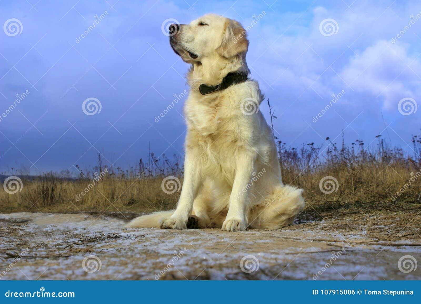 Συνεδρίαση σκυλιών στο δρόμο και αναμονή για τον ιδιοκτήτη