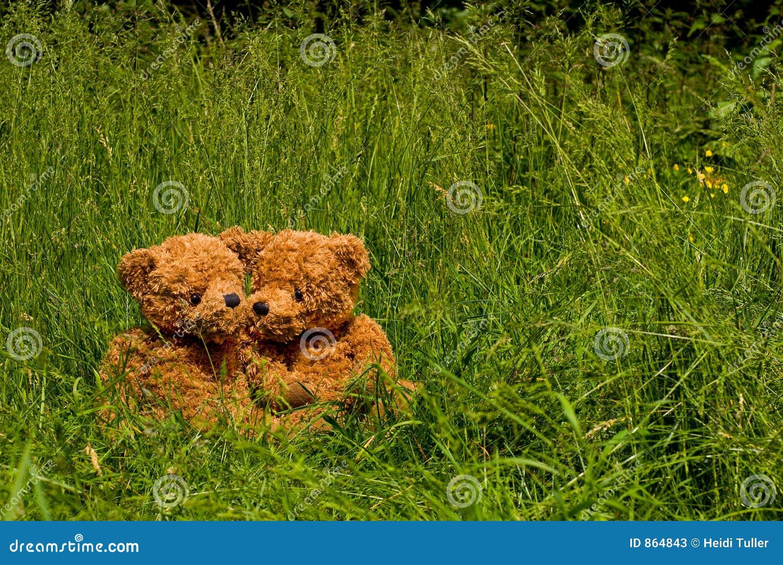 συνεδρίαση χλόης ζευγών teddybear