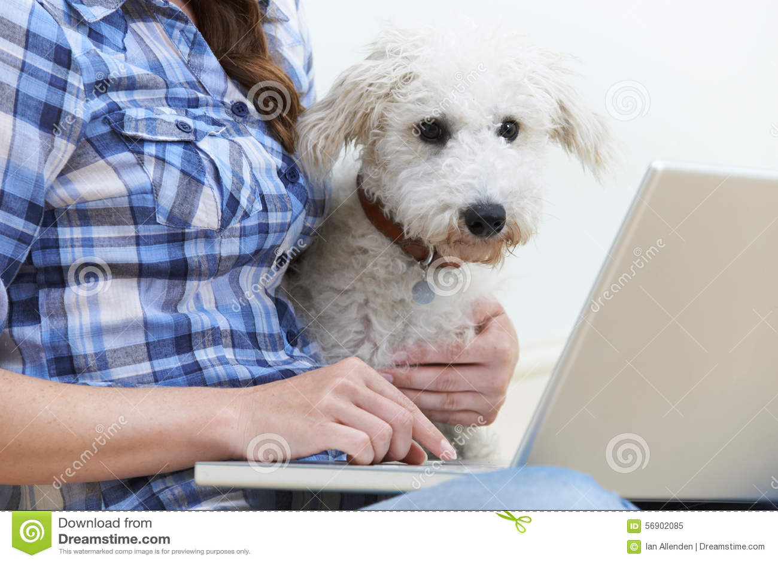 Συνεδρίαση σκυλιών δίπλα στον ιδιοκτήτη που χρησιμοποιεί το lap-top