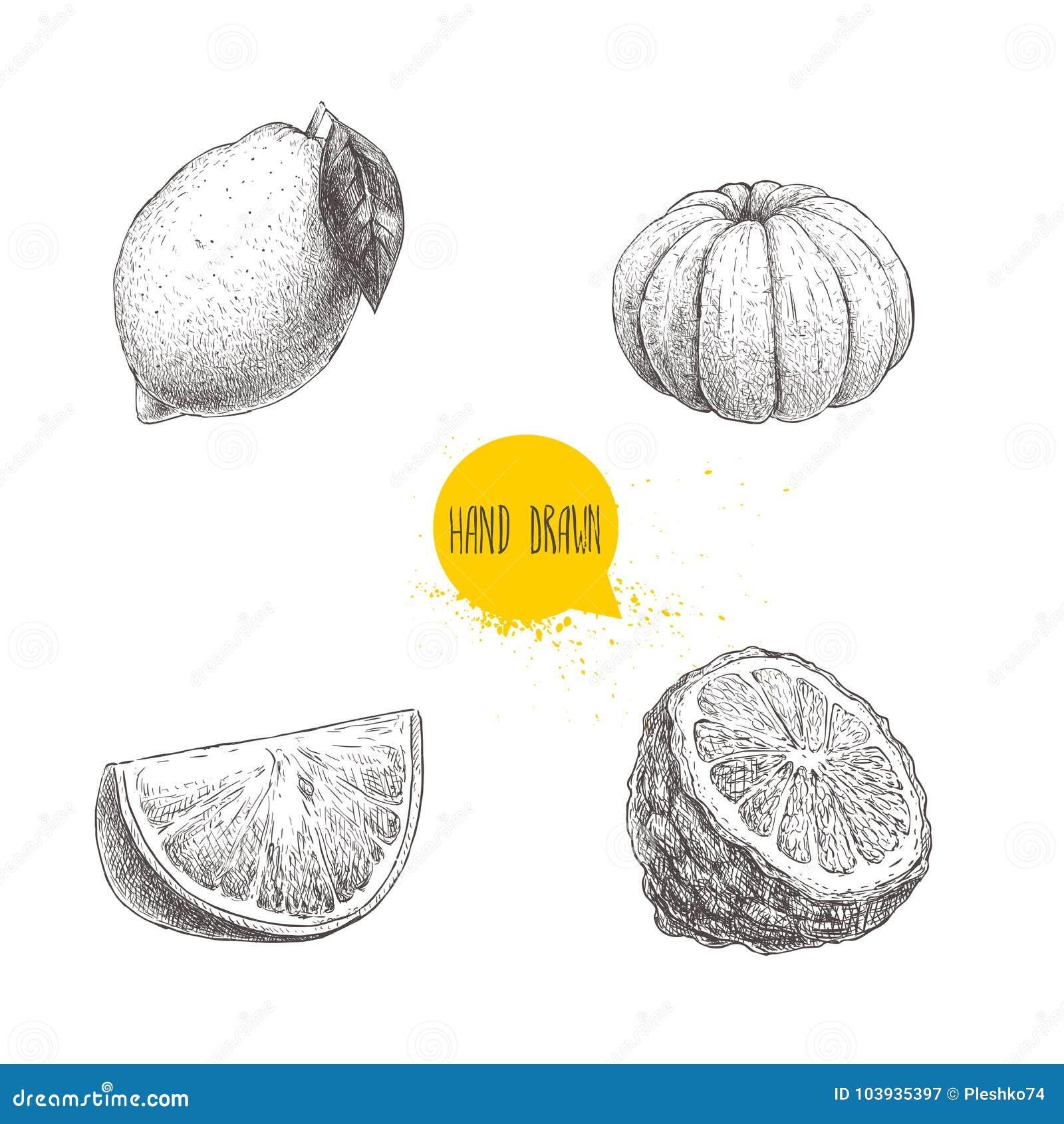 Συρμένα χέρι εσπεριδοειδή ύφους σκίτσων καθορισμένα Το λεμόνι, ασβέστης, ξεφλούδισε tangerine, το μανταρίνι, την πορτοκαλιά φέτα