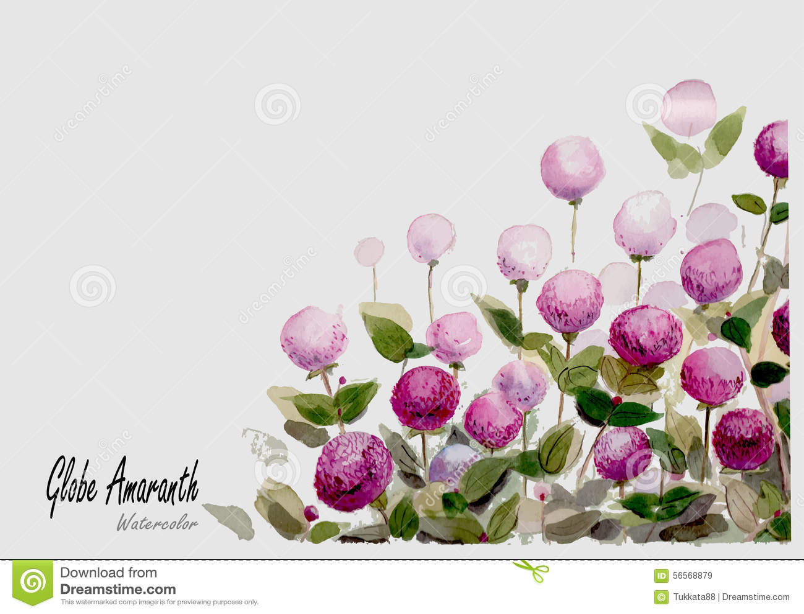 Download Συρμένη ζωγραφική Watercolor σφαιρών χέρι στο άσπρο υπόβαθρο Διανυσματική απεικόνιση - εικονογραφία από φυτό, σφαίρα: 56568879