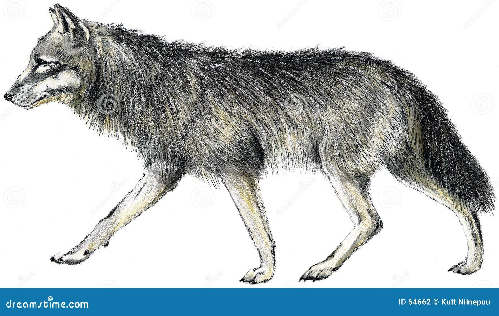 συρμένος λύκος