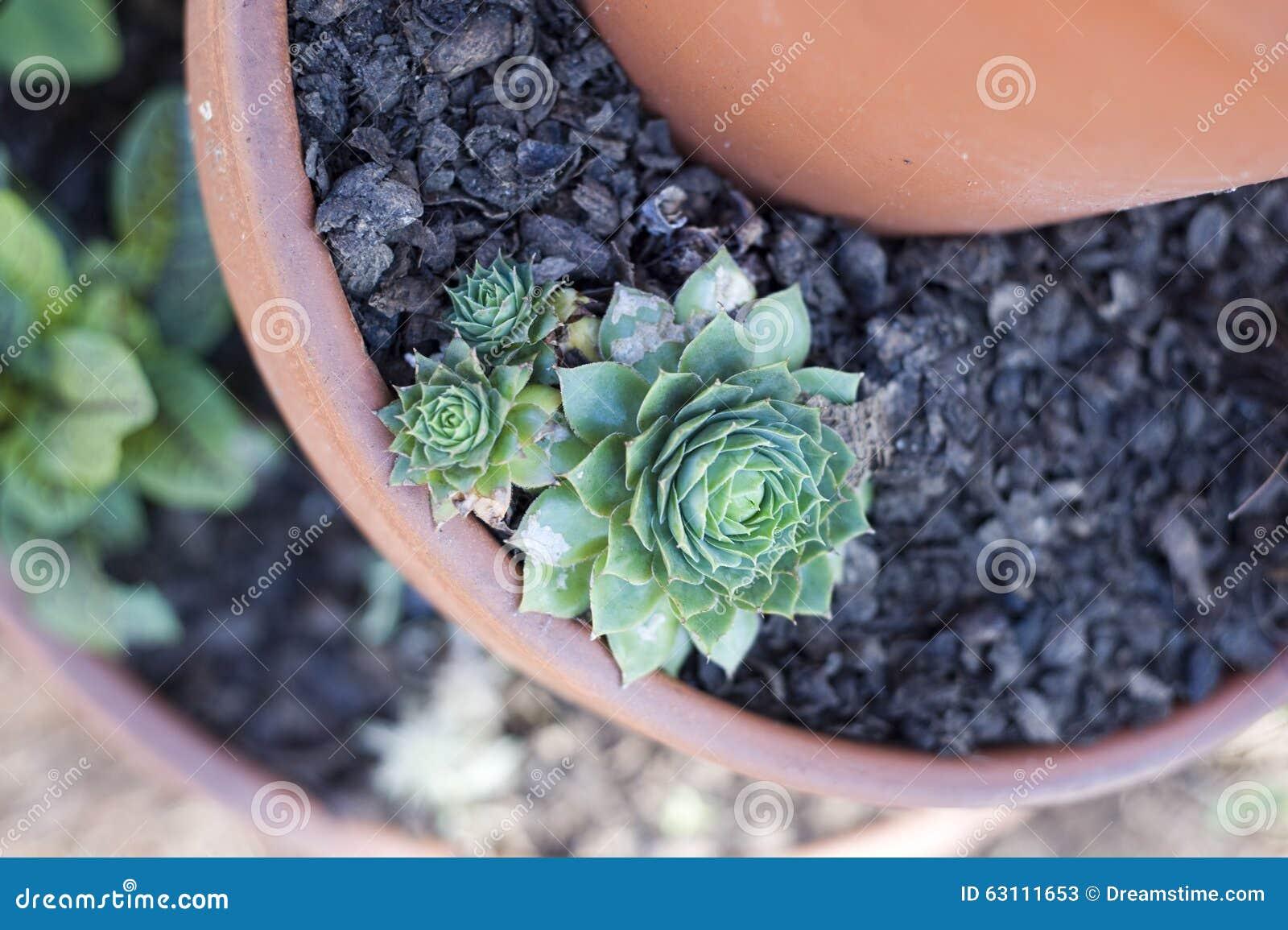 Συσσωρευμένα δοχεία με το Succulent κήπο