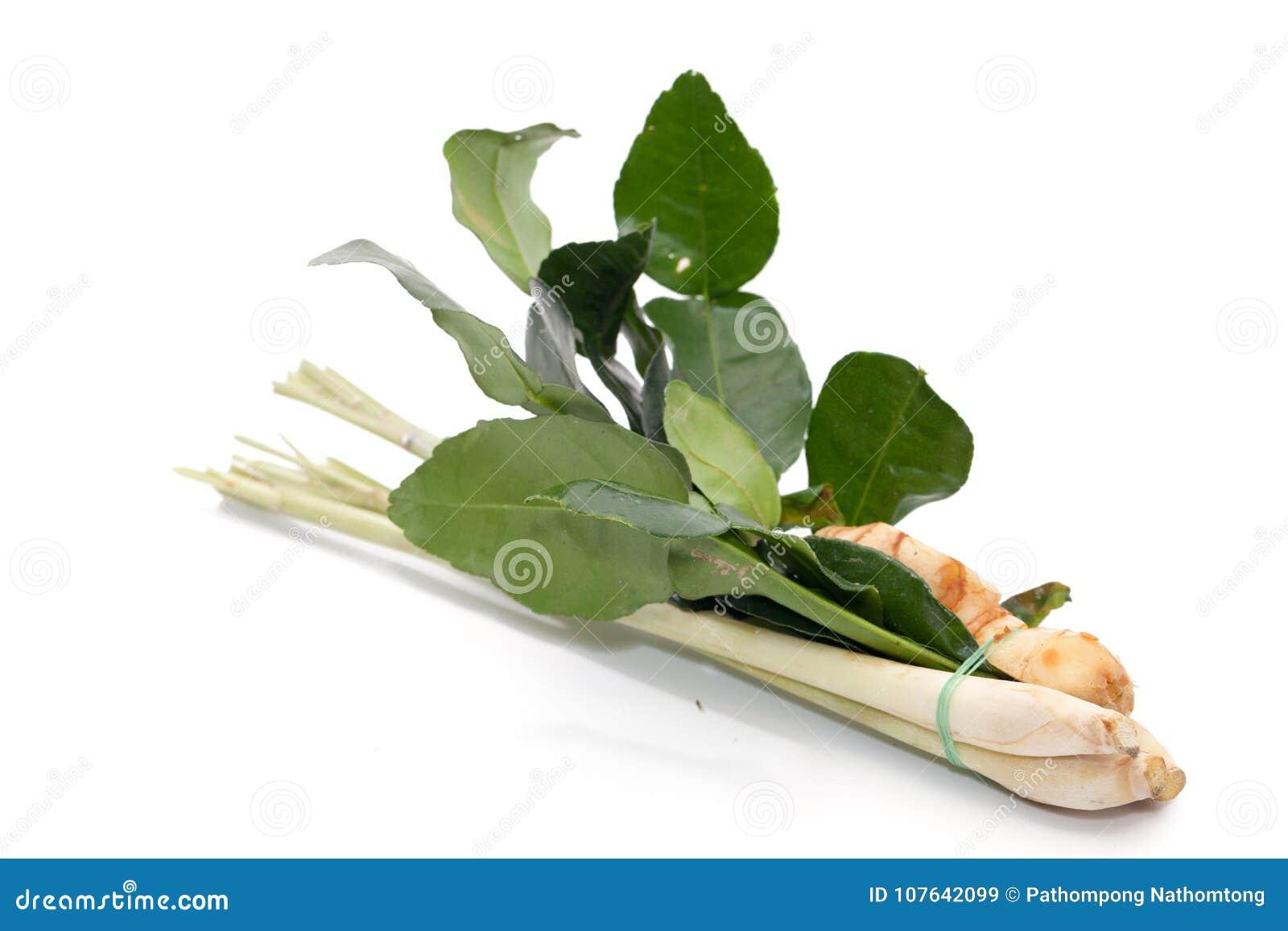Συστατικό για την πιπερόριζα του Tom yum, Galangal, χλόη λεμονιών, KAF