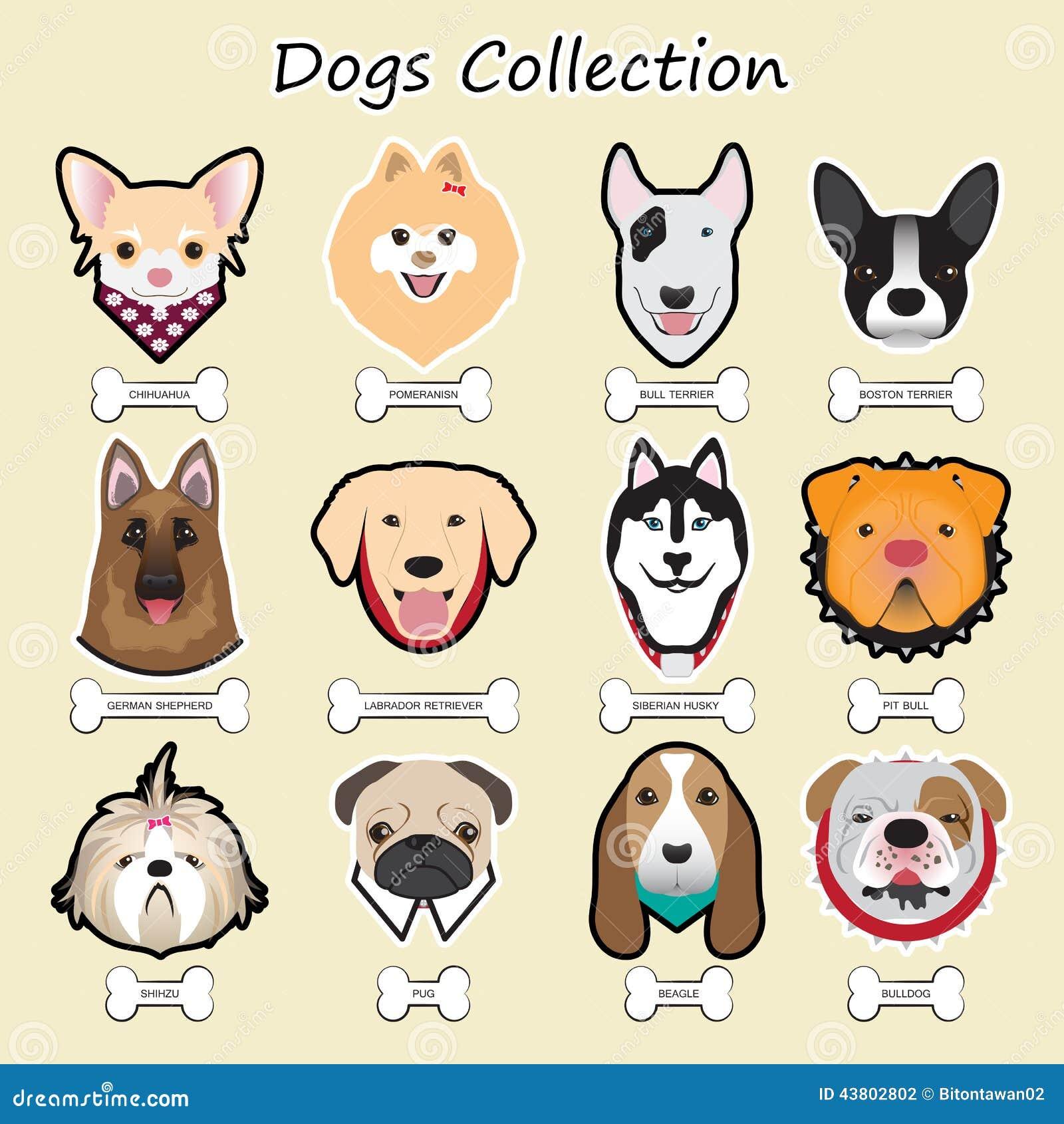 συλλογή σκυλιών, διάνυσμα