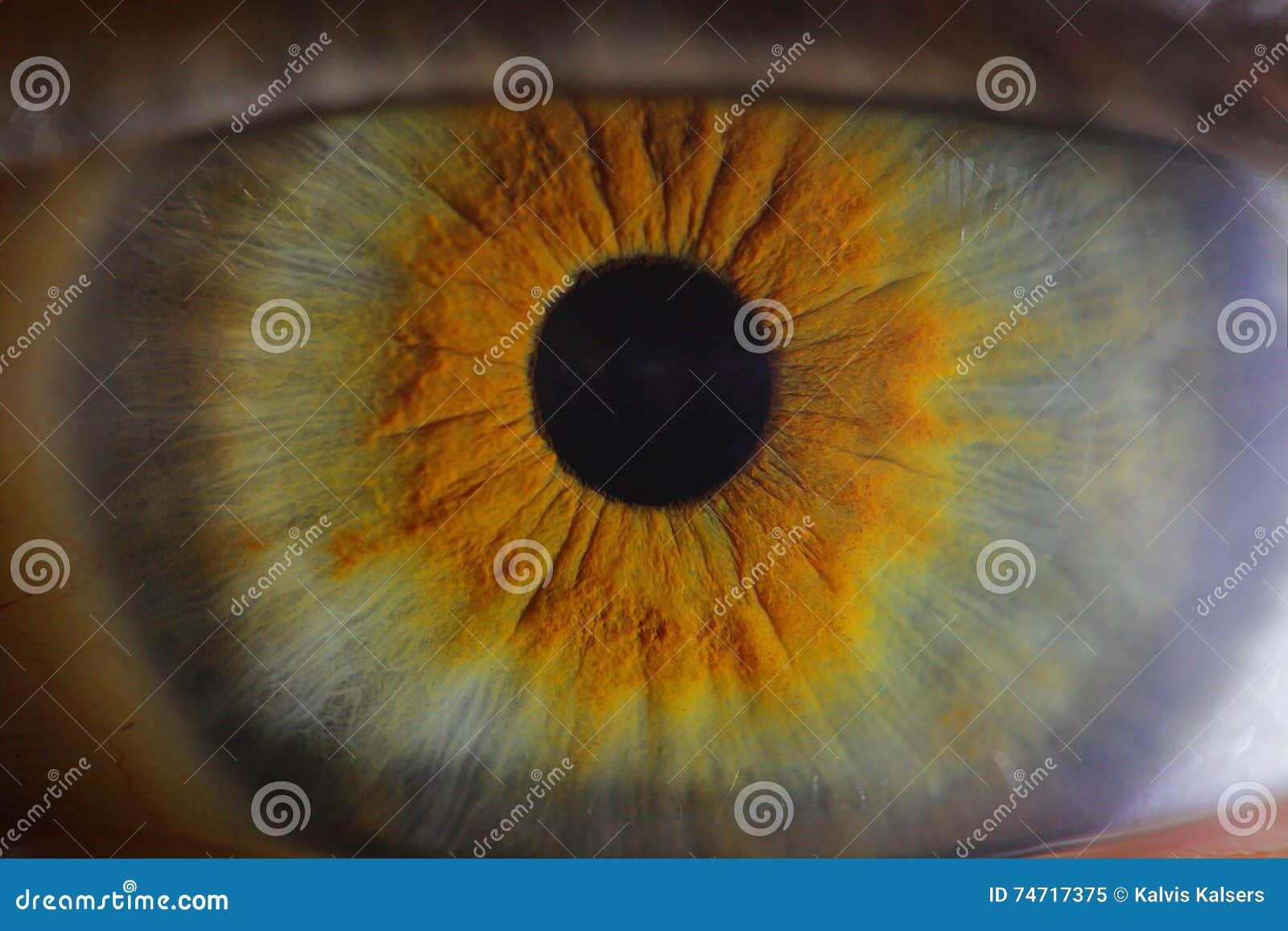 Σφαίρα ματιών