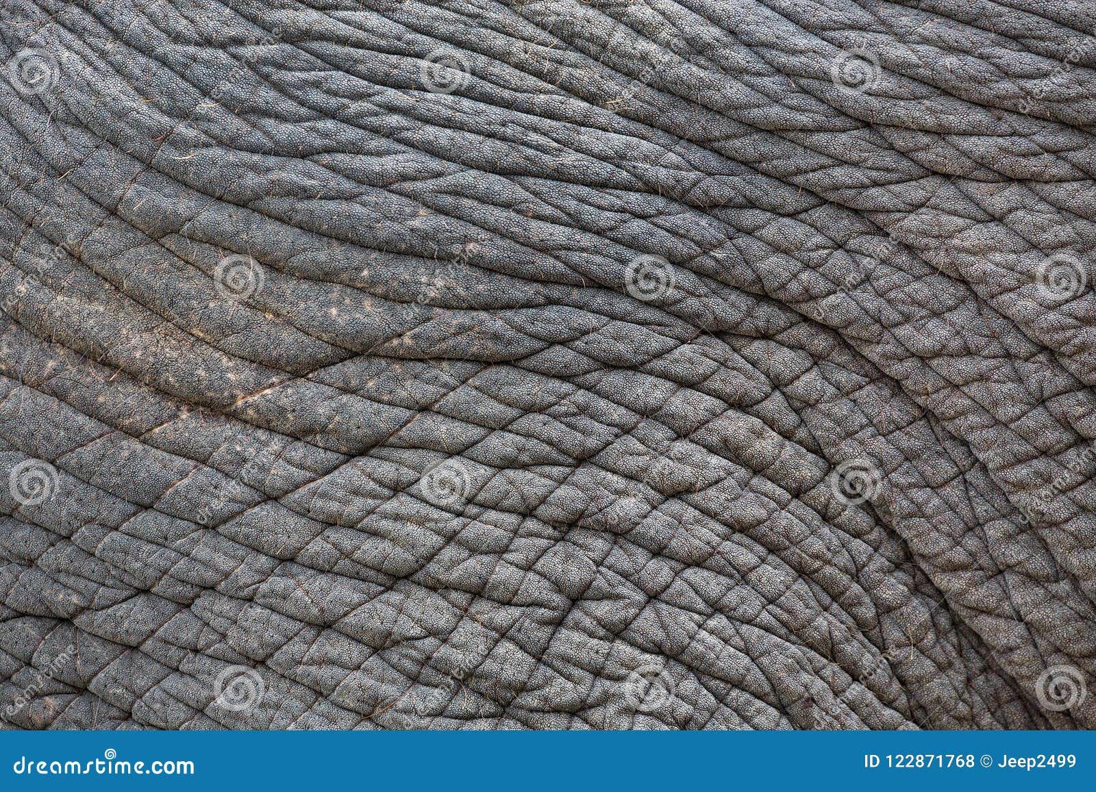 σχέδια και δέρμα των ελεφάντων